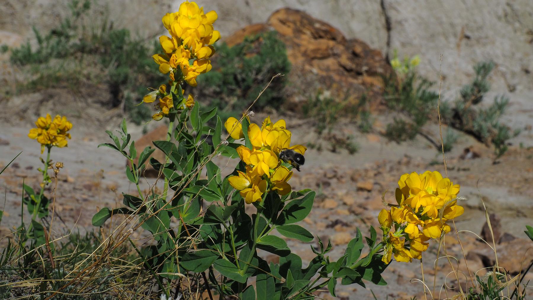 die ersten Frühlingsblumen
