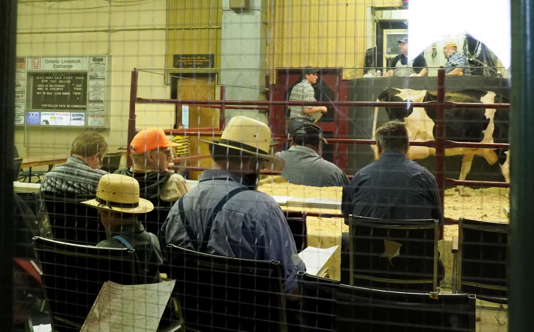 Viehversteigerung Farmer's Market