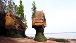 Hopewell Rock 2