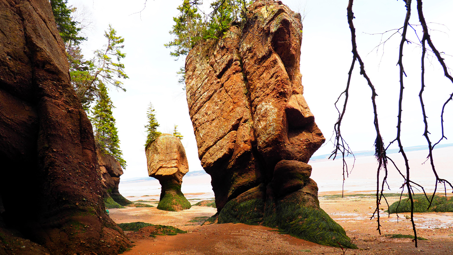 Hopewell Rock 3