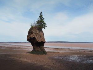 Hopewell Rock 6