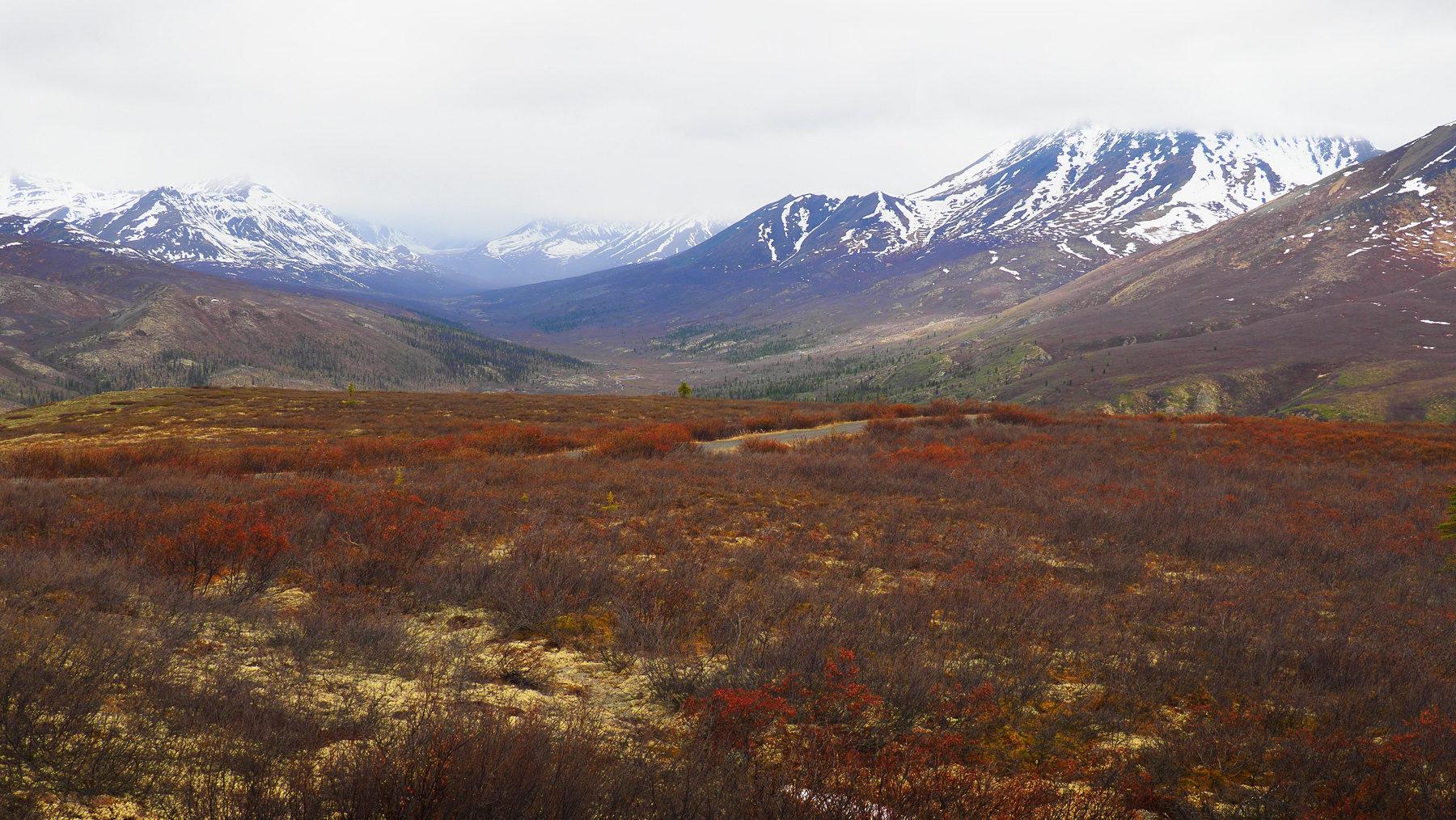 weite unberührte Tundra