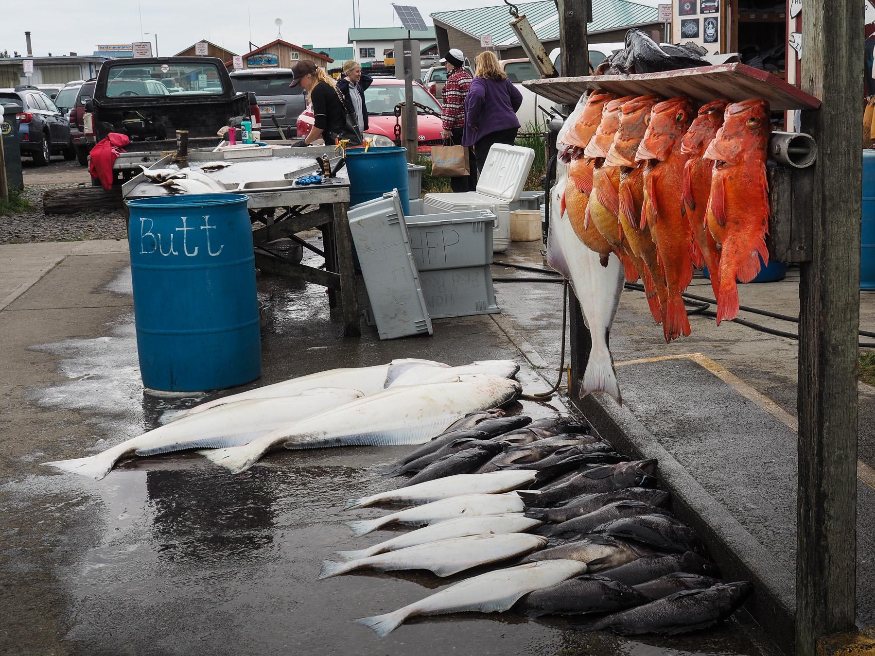 Fischfang, nachmittags kommen die Boote zurück und der Fang wird verarbeitet