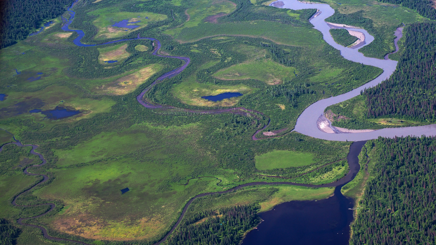 Moose Land bei Talkeetna