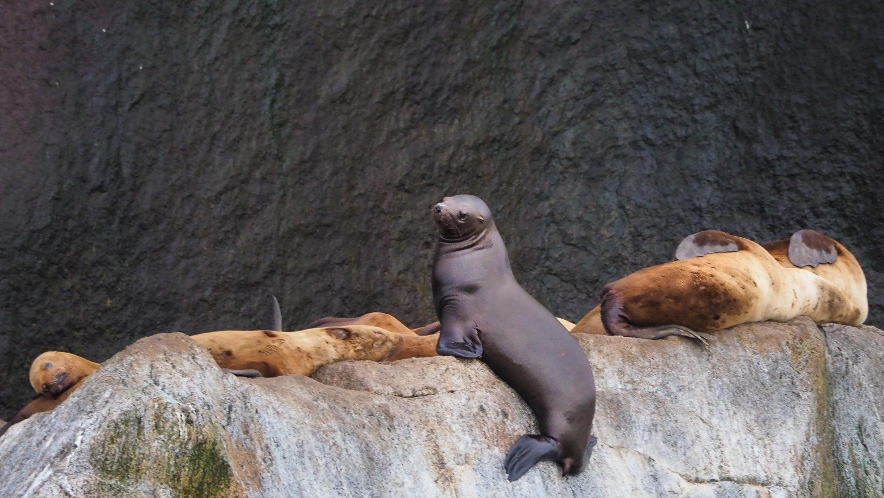 dieser Seehund möchte auch noch einen Platz