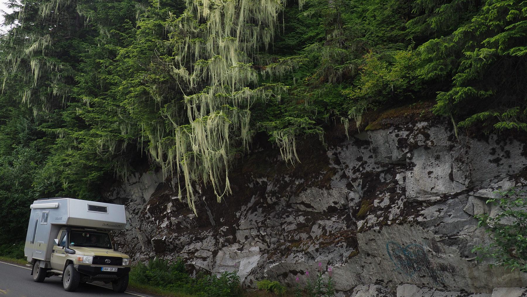 meterlange Flechten in den Bäumen
