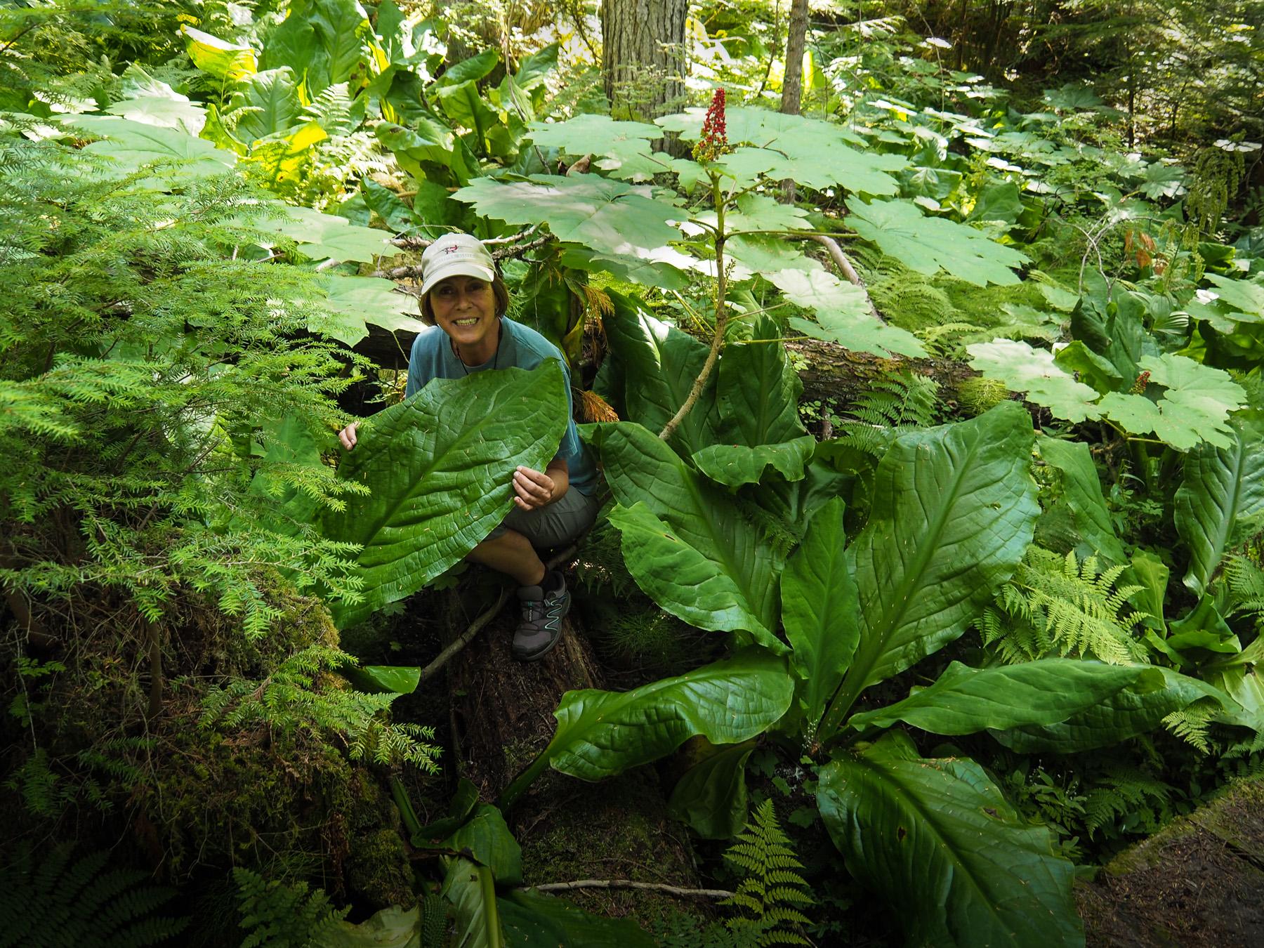 Wälder mit üppiger Vegitation