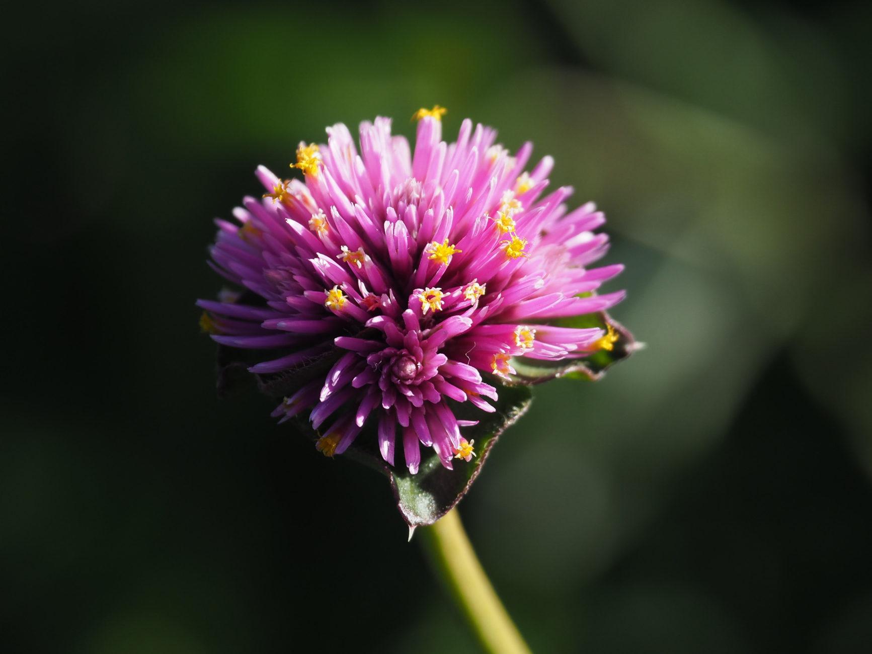 eine der wenigen besonderen Blüten in Butchard Gardens