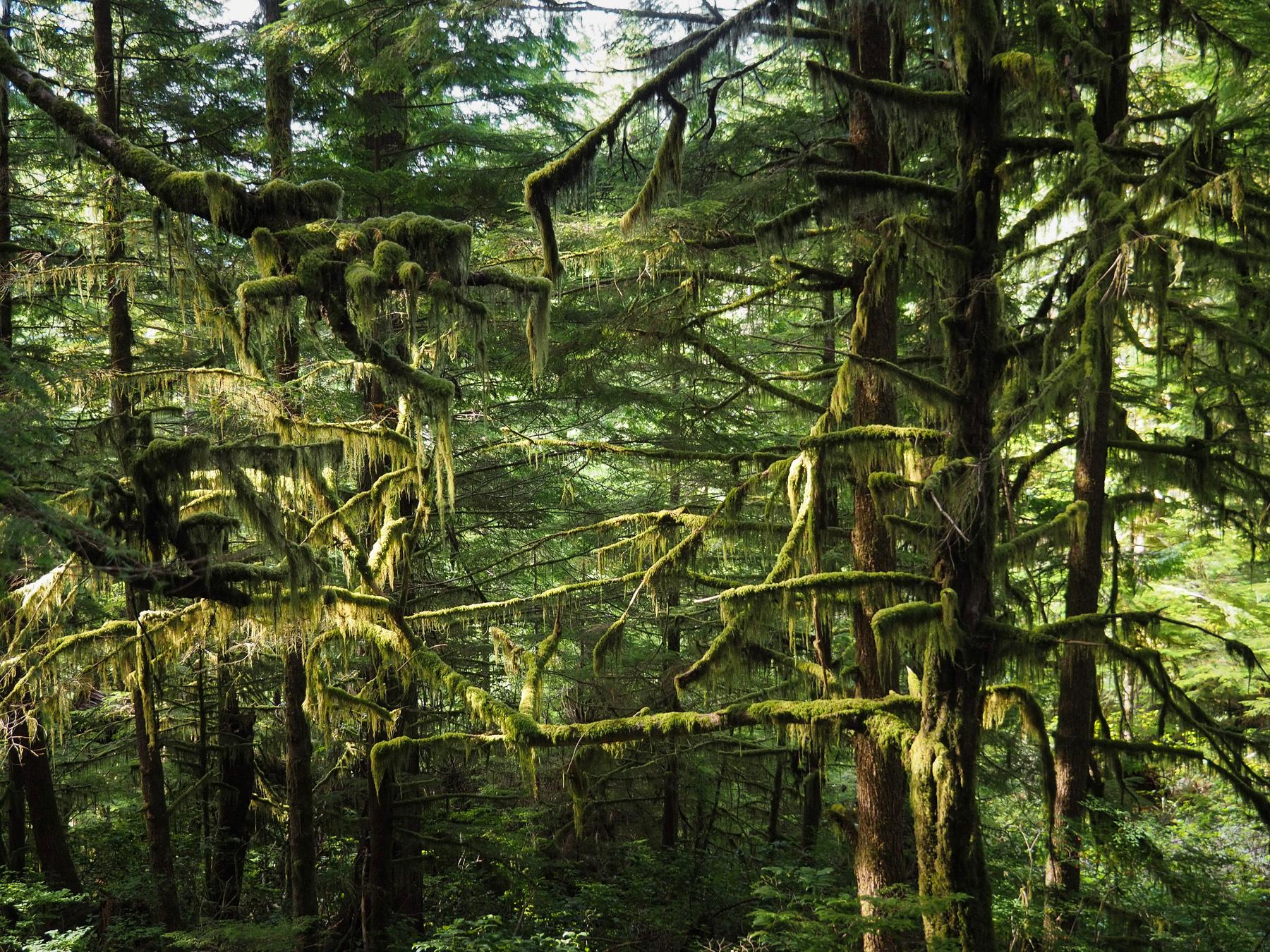 urzeitlicher Regenwald
