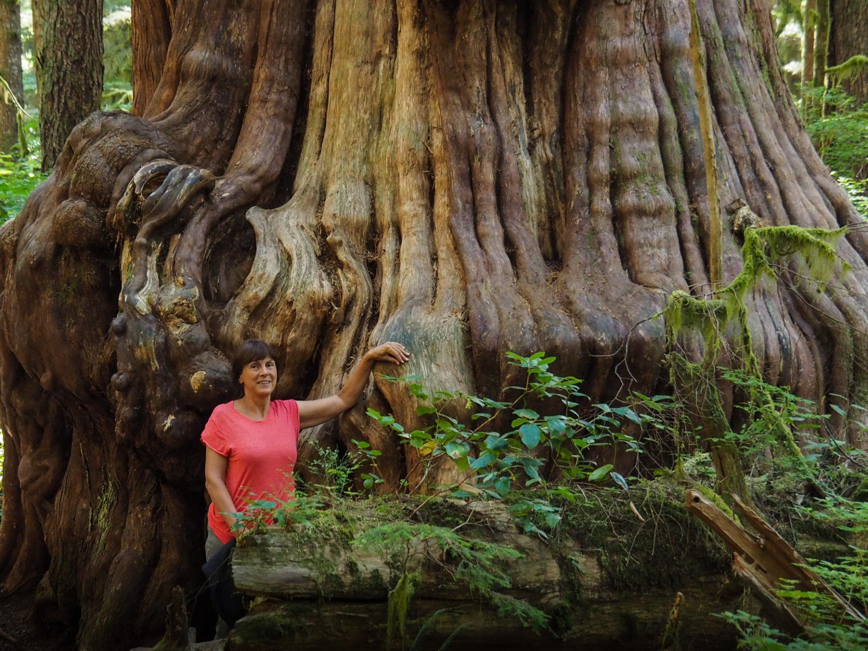 Avatar Grove, urzeitlicher versteckter Regenwald