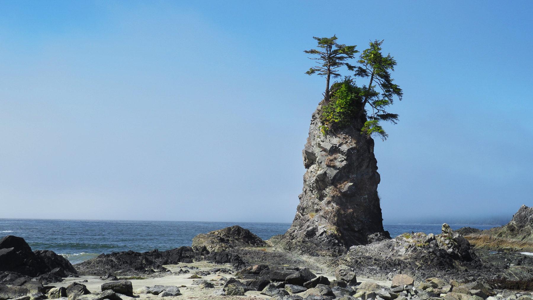 bizarre korrige Bäume auf kleinen Felsinseln