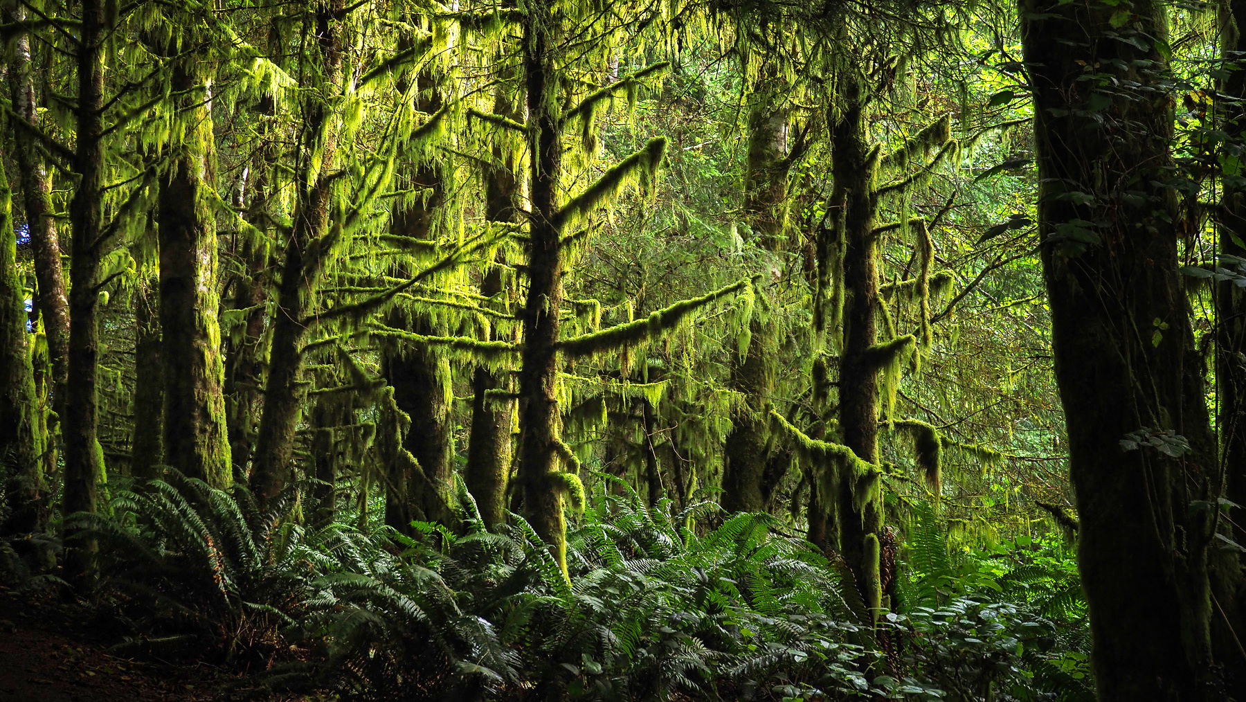 "Regenwald an der berühmten ""Long Beach"" von Vancouver Island"