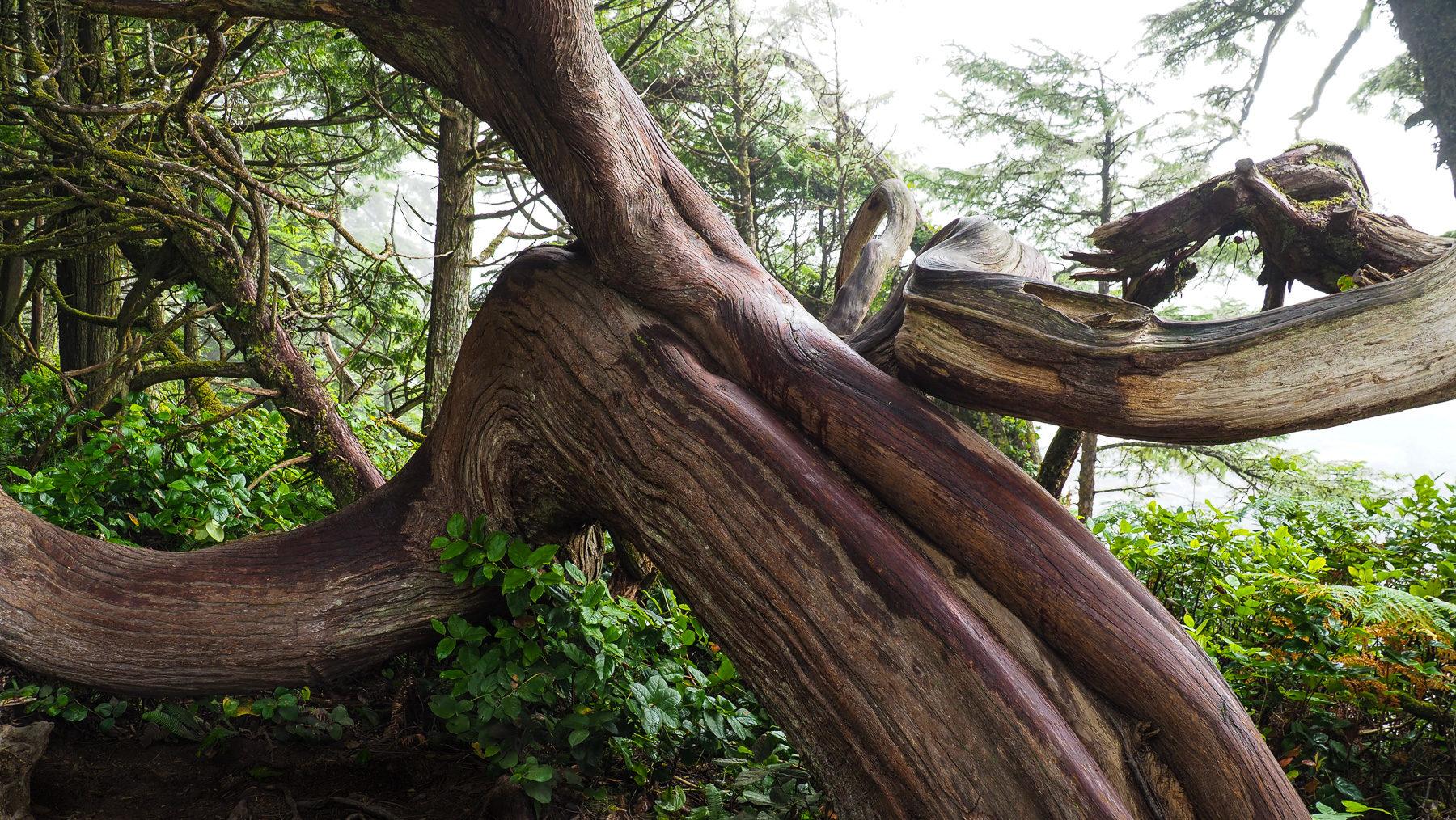 bizzare Bäume und Wurzeln an jeder Ecke
