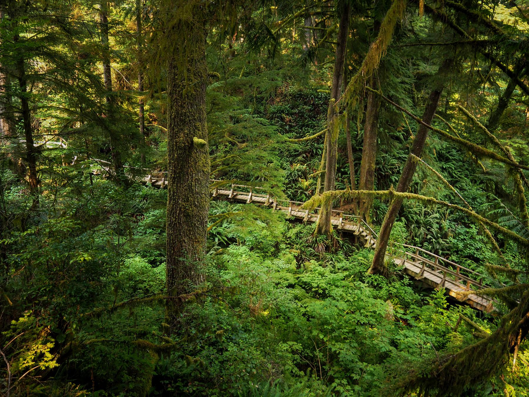 Schonner Trail im Pazifik Rim NP