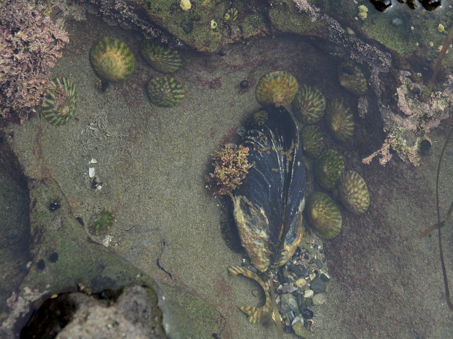 Lebendiger Tümpel am Botanical Beach