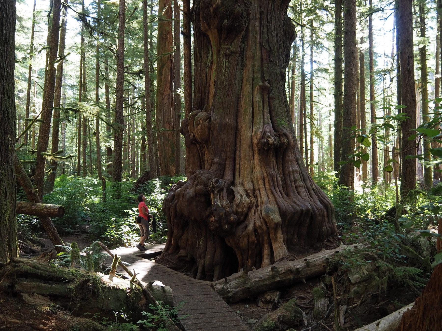Bei den Riesen im Avatar Grove