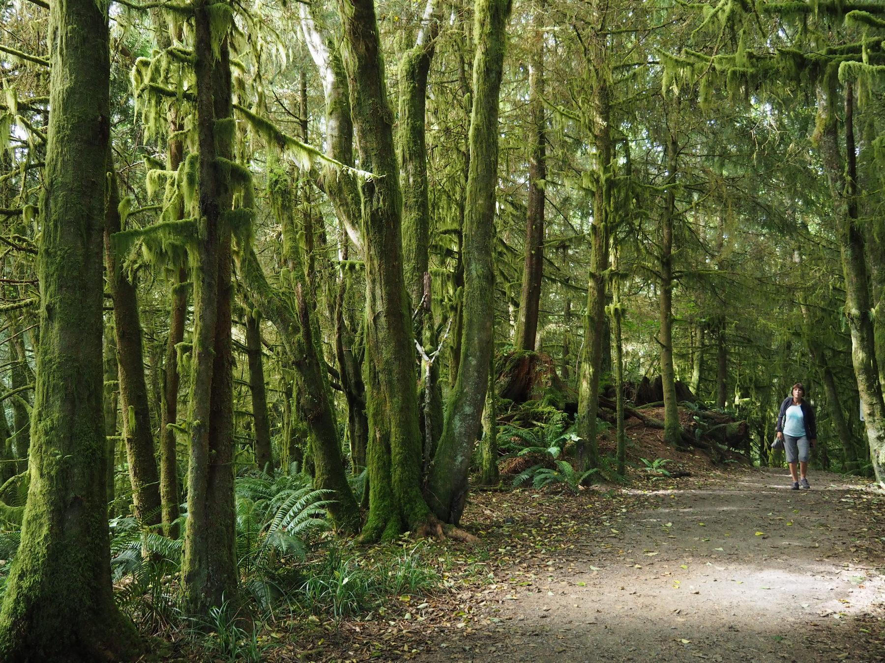 Spaziergang im Märchenwald