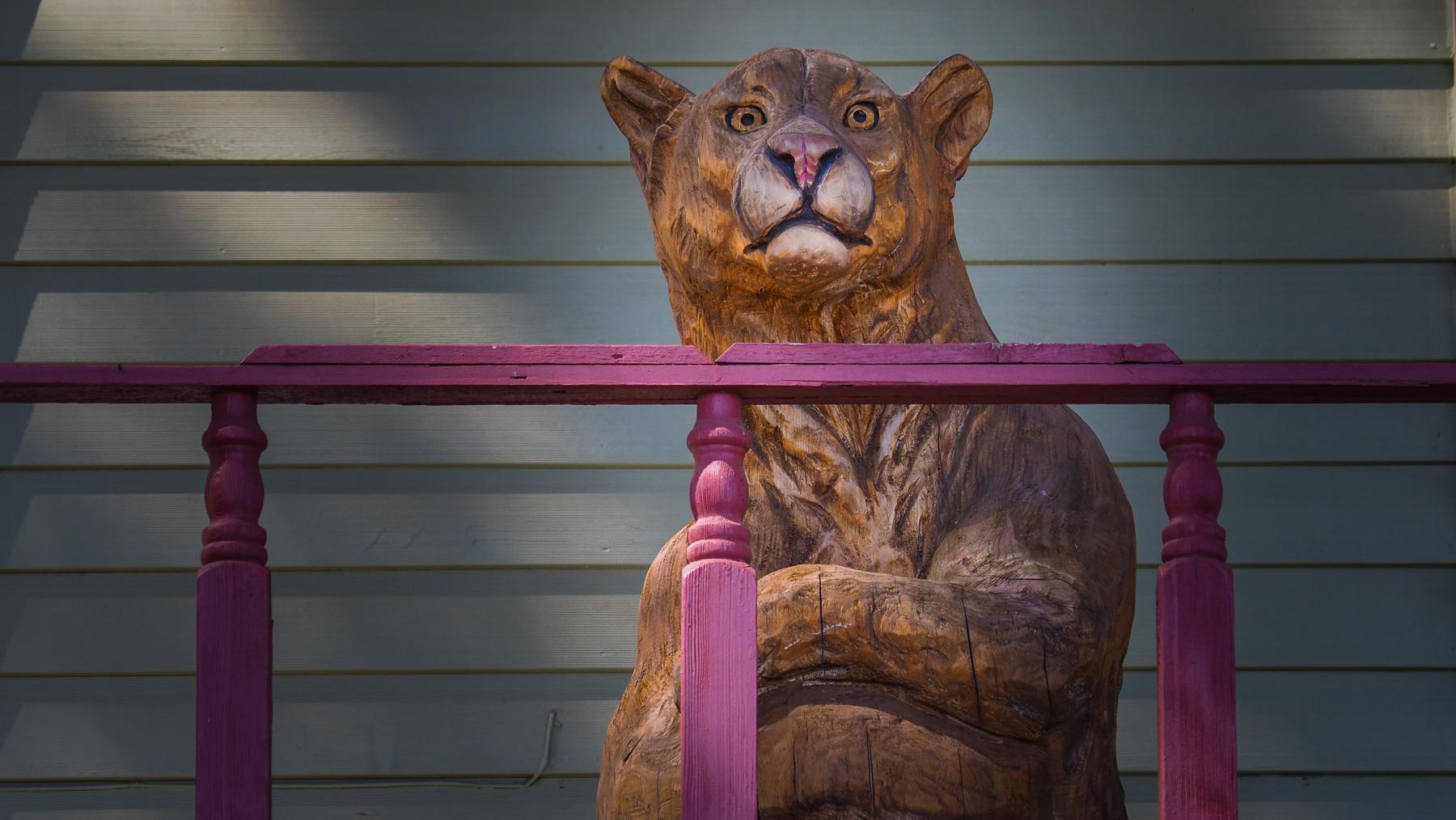 der einzige Mountain Lion bisher :)