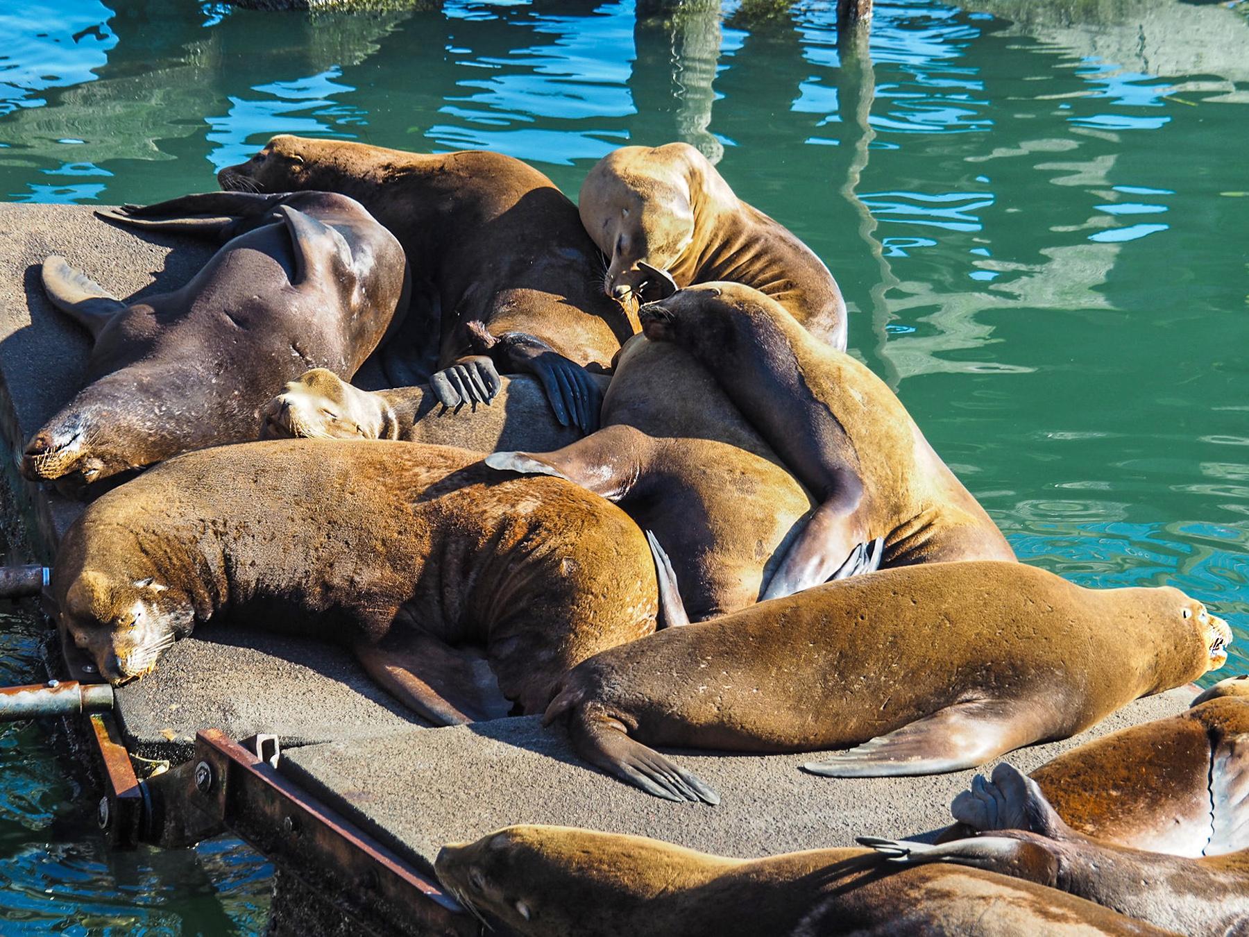 so ein lustiger Haufen Seelöwen, kreuz und quer