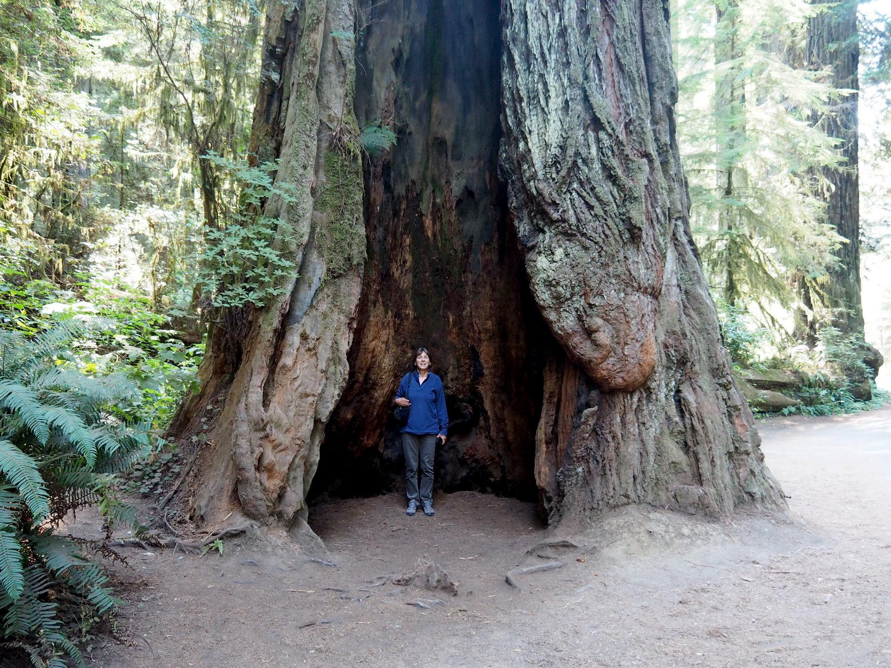 Monika im Baum