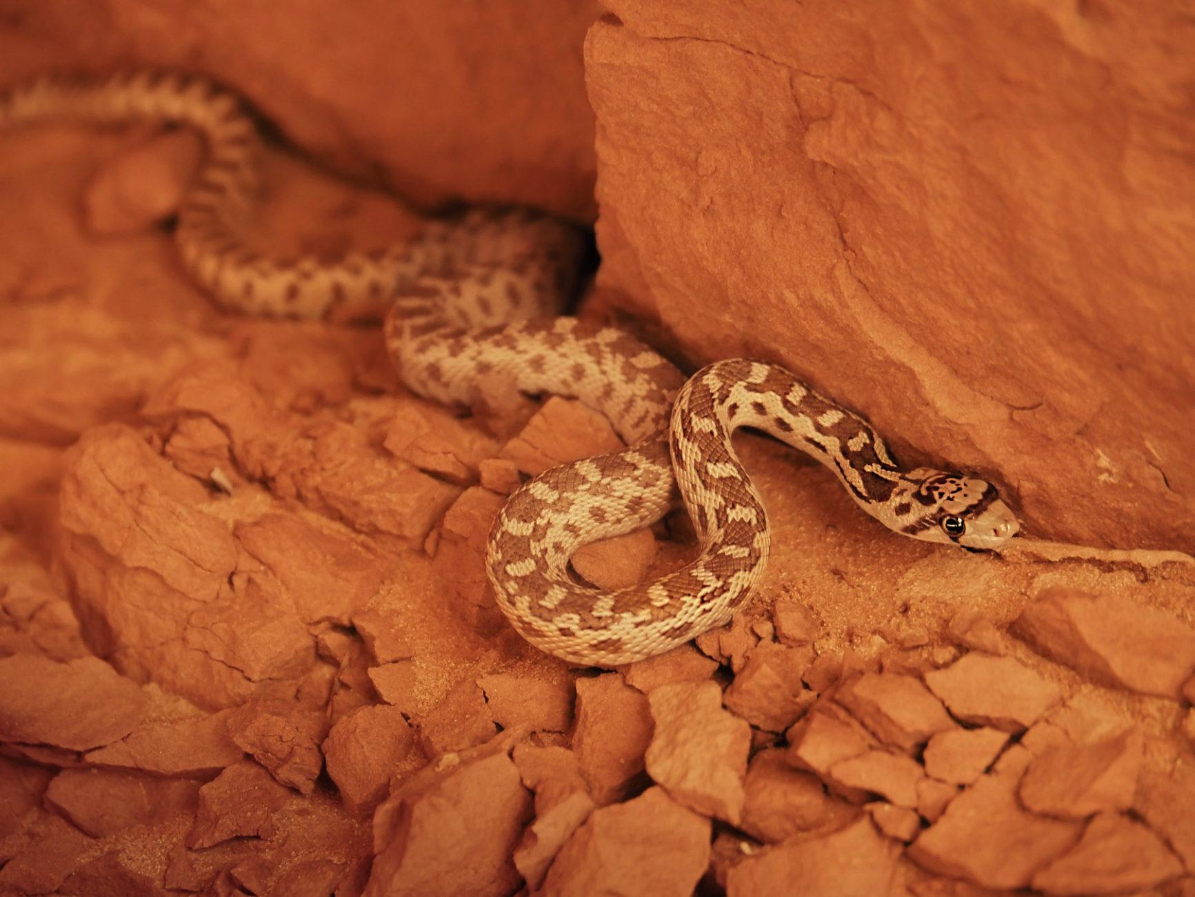 Georg entdeckt eine kleine Schlange