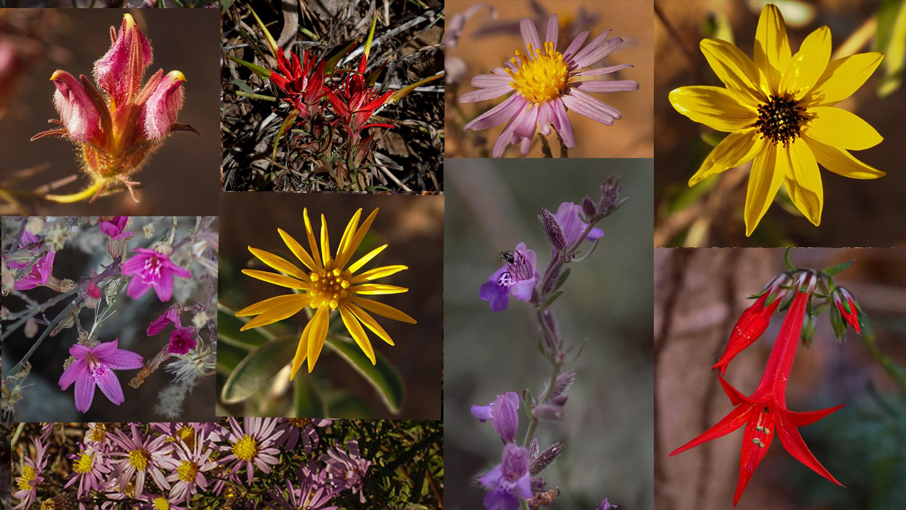 Seltene Blumen im Canyon