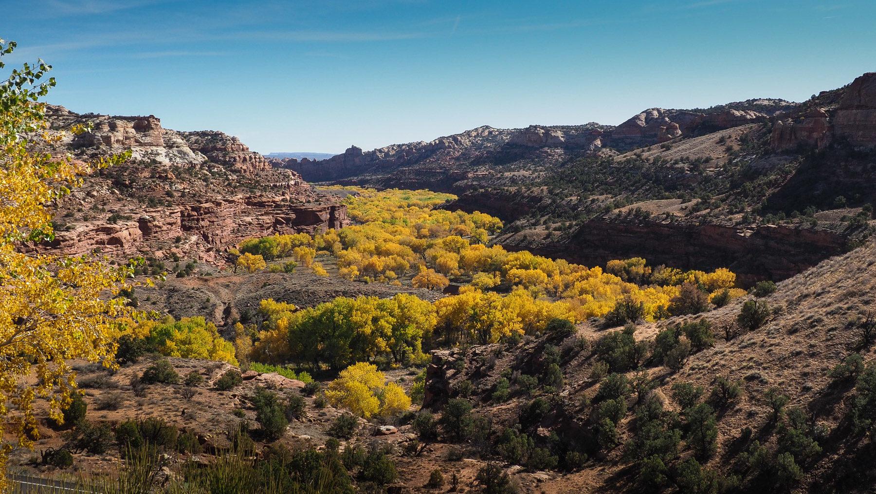 Die Canyons mit herbstlich gefärbten Cottonwoods – wunderschön!