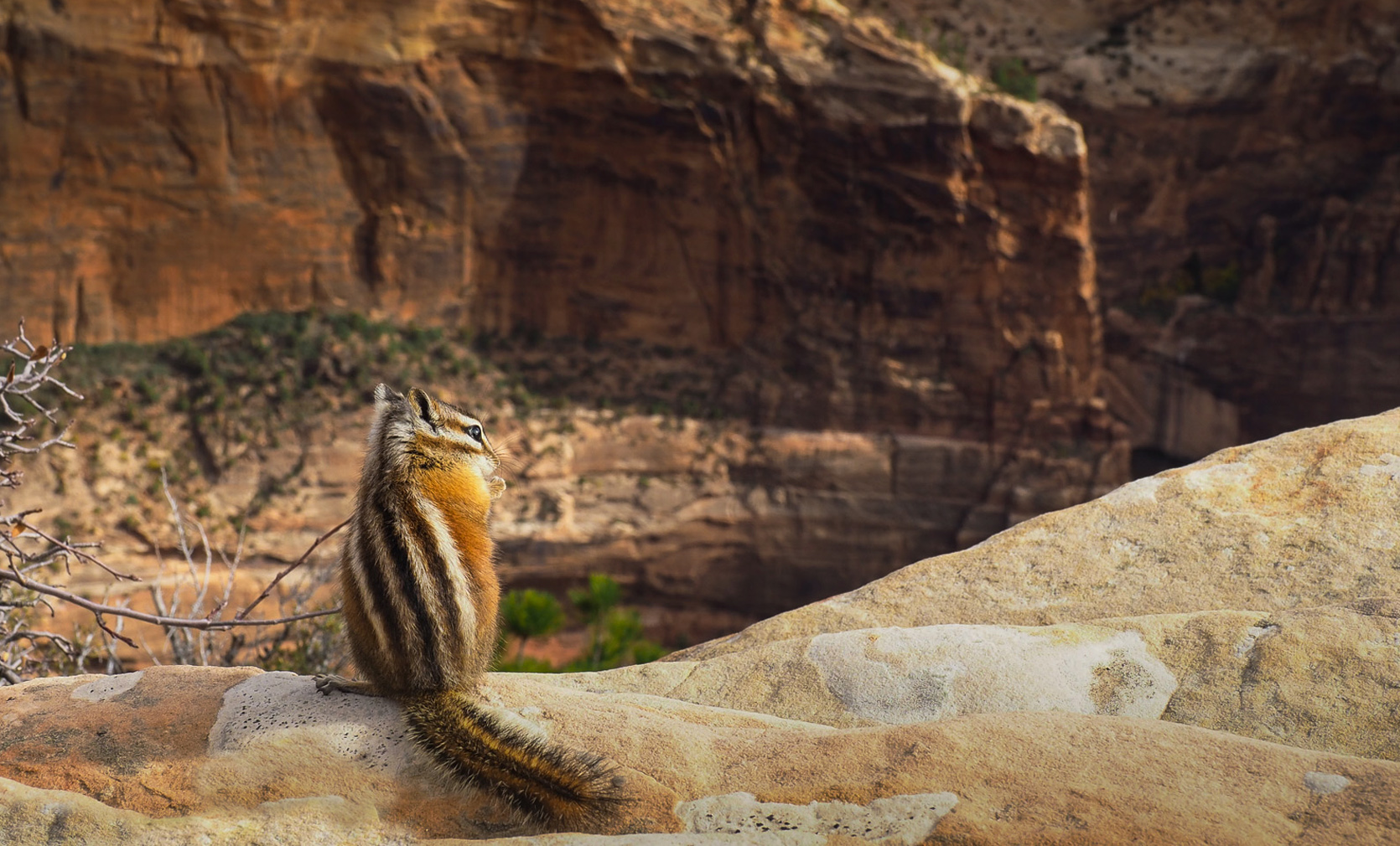 Freche Chipmunks am Angels Landing