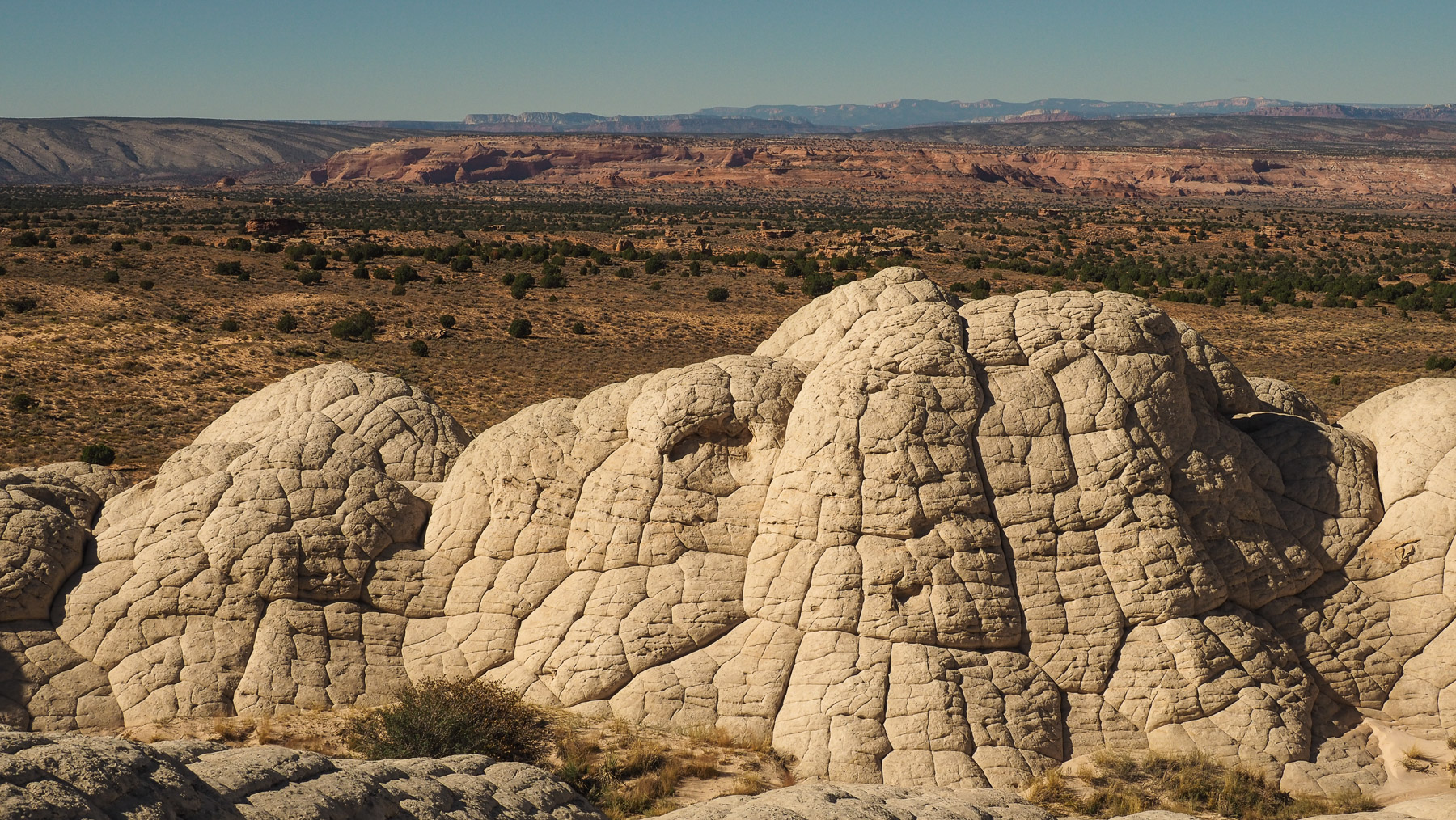 White Pocket in Utah, kleine seltsam geformte Felsformation (versteinerter verschiedenfarbiger Schlamm bzw. Sanddünen)