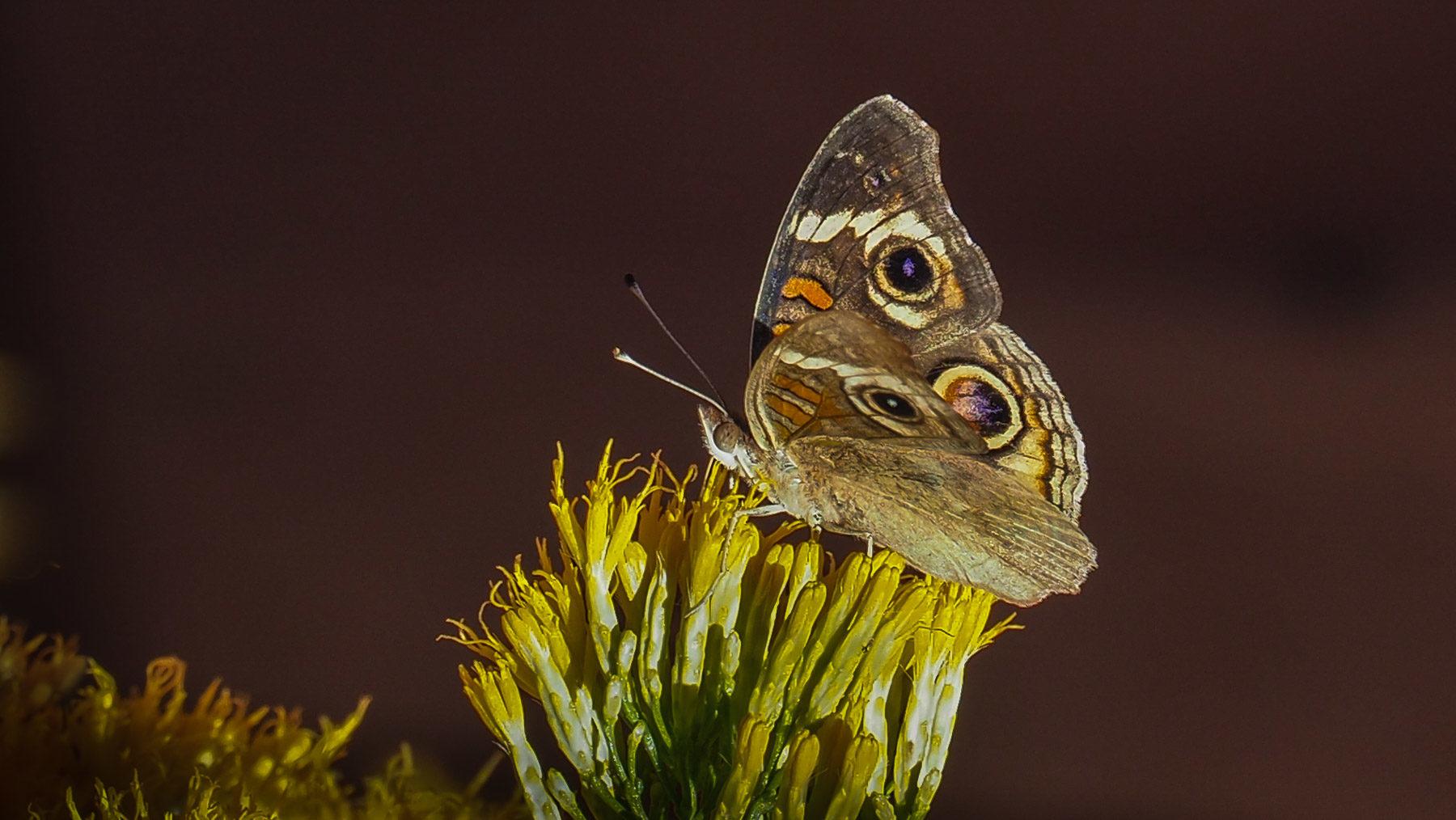 Was Besonderes in der Wüste: Blüte mit Schmetterling