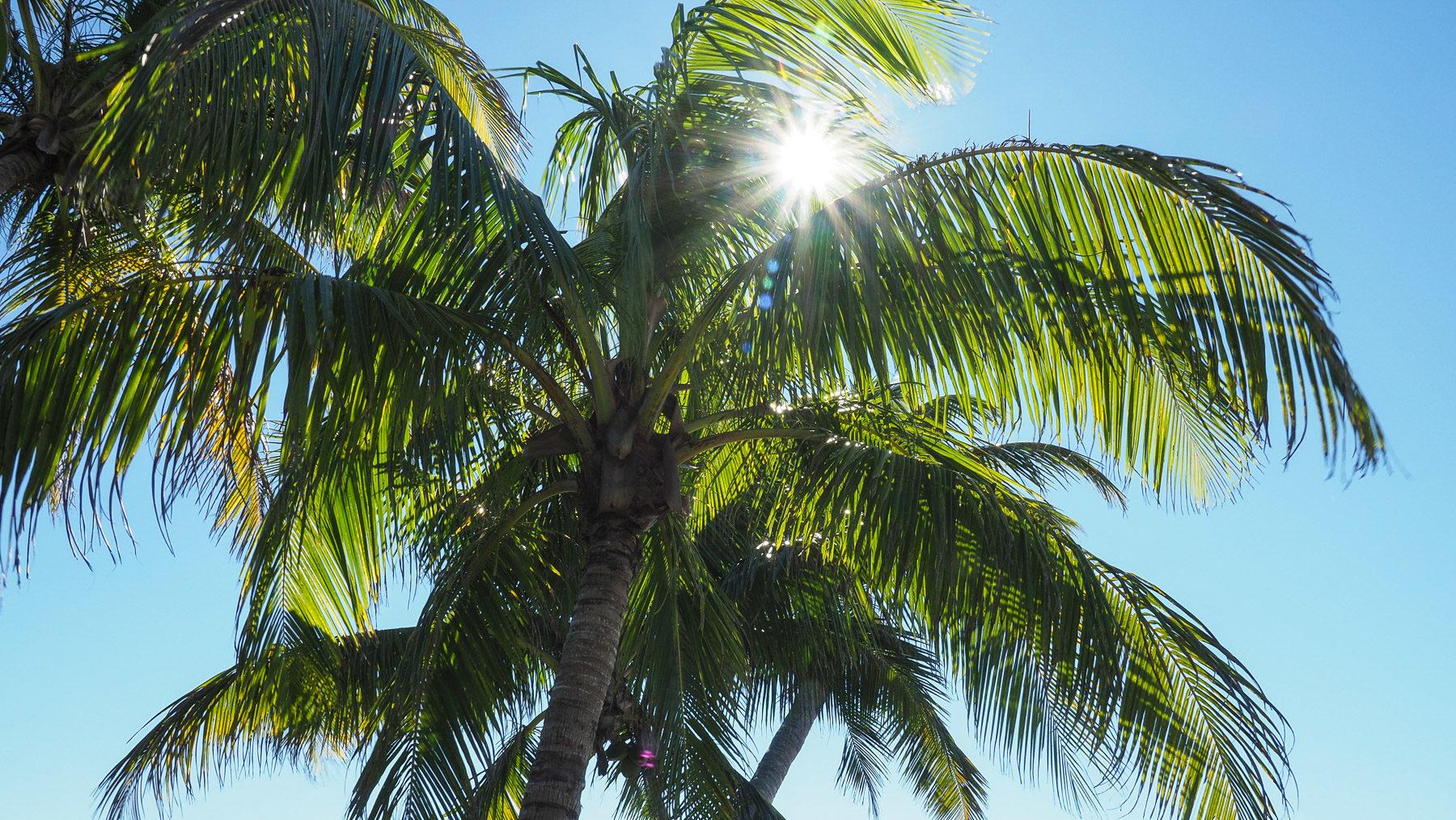 so viele Palmen überall