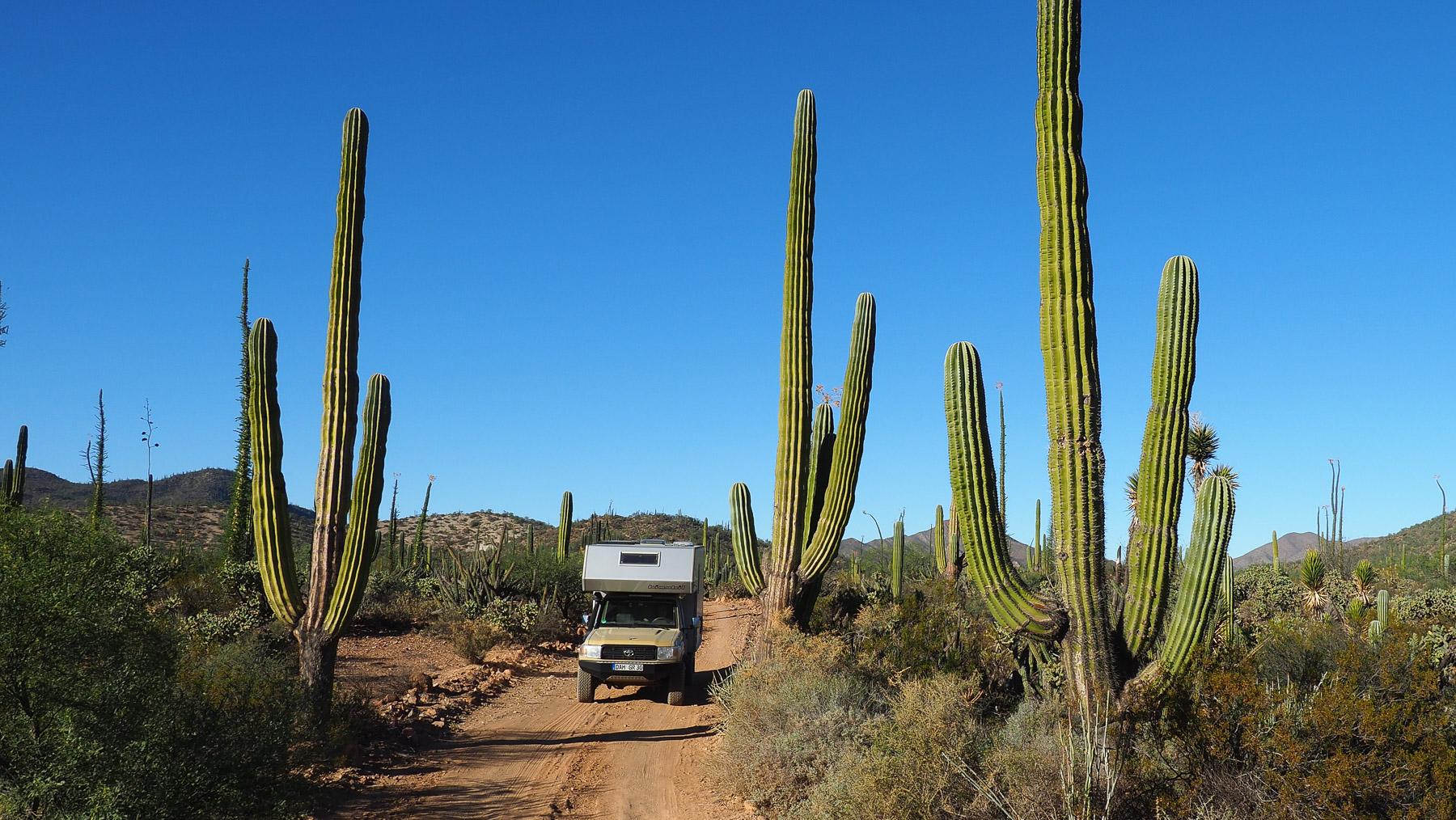 Lange Fahrt zur Mission de San Borja