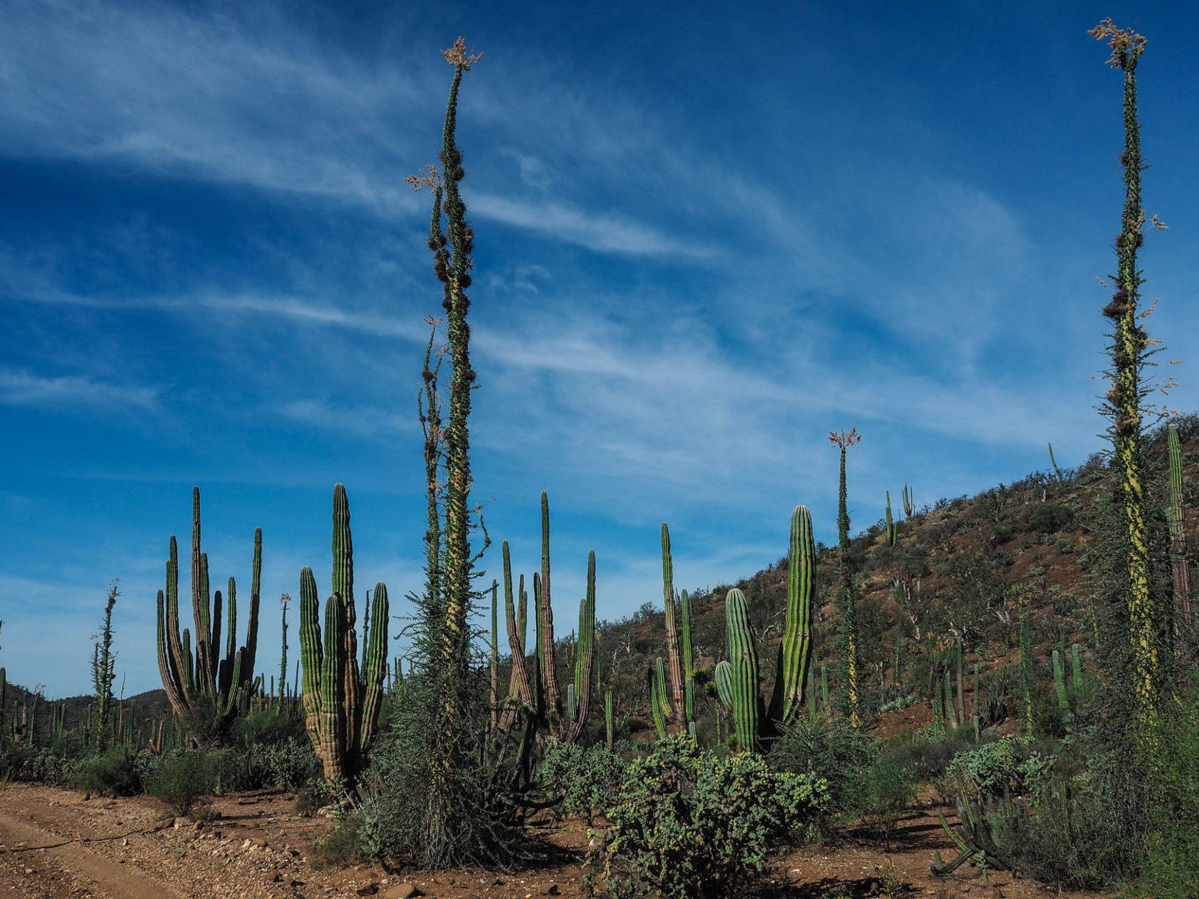 Soll das ein Kaktus sein?