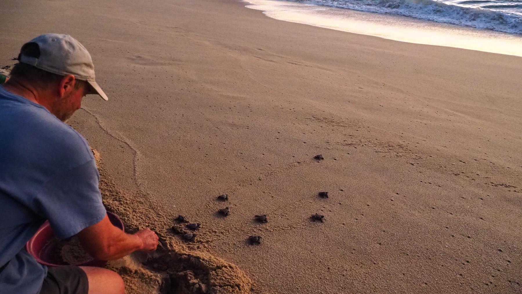 """Georg schickt """"seine"""" Schildkröten auf ihren Weg zum Meer"""