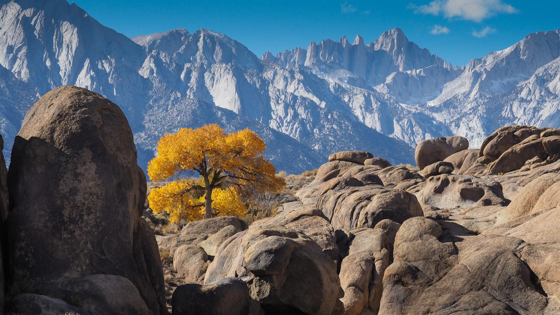 Herbstbaum vor der Sierra