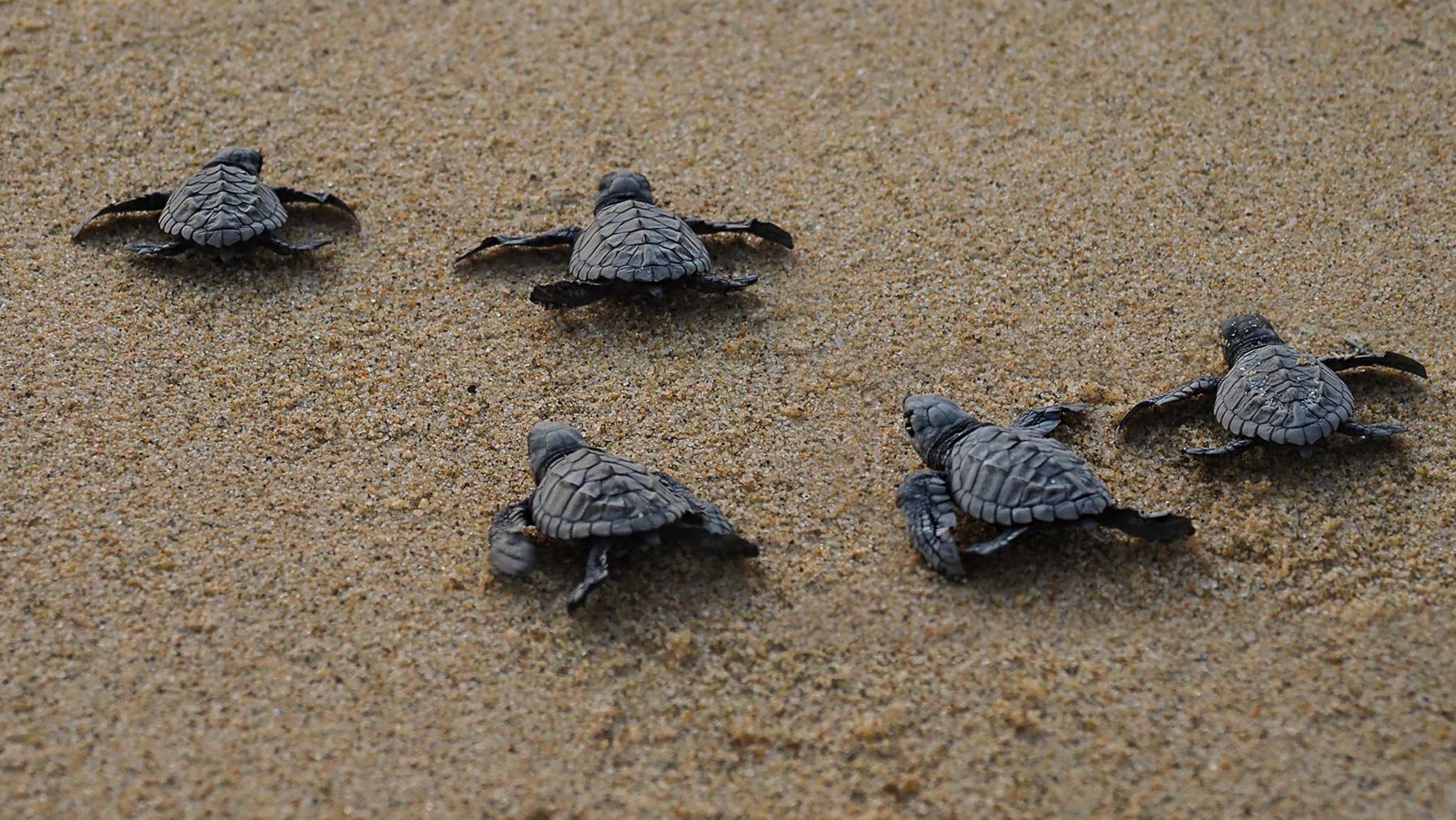 Schildkrötenwettrennen