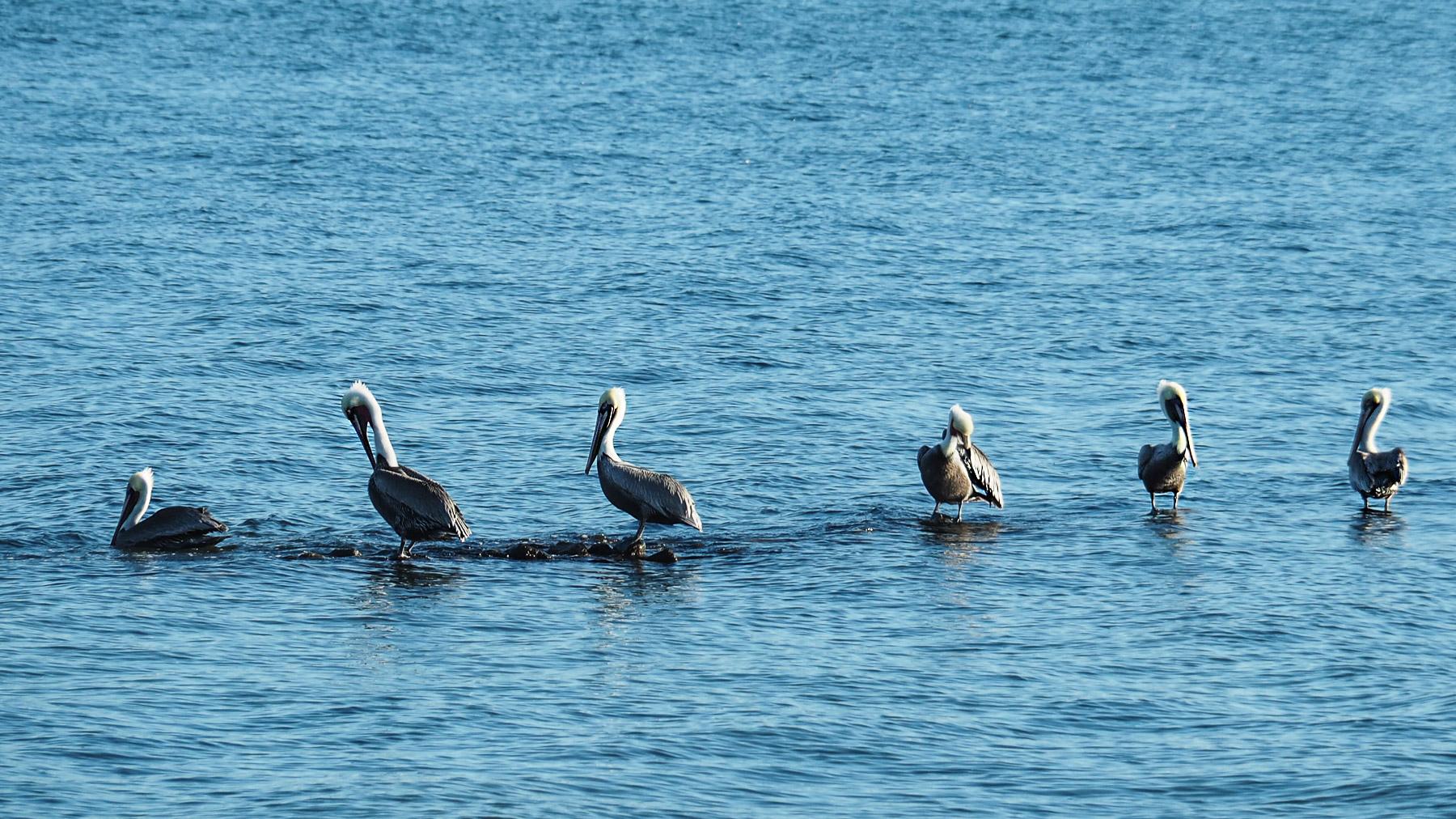 Pelikane gefallen uns am besten