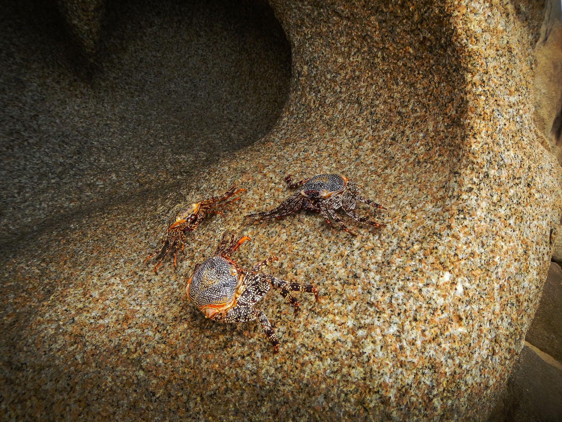 Krabbenstelldichein zwischen den Felsen