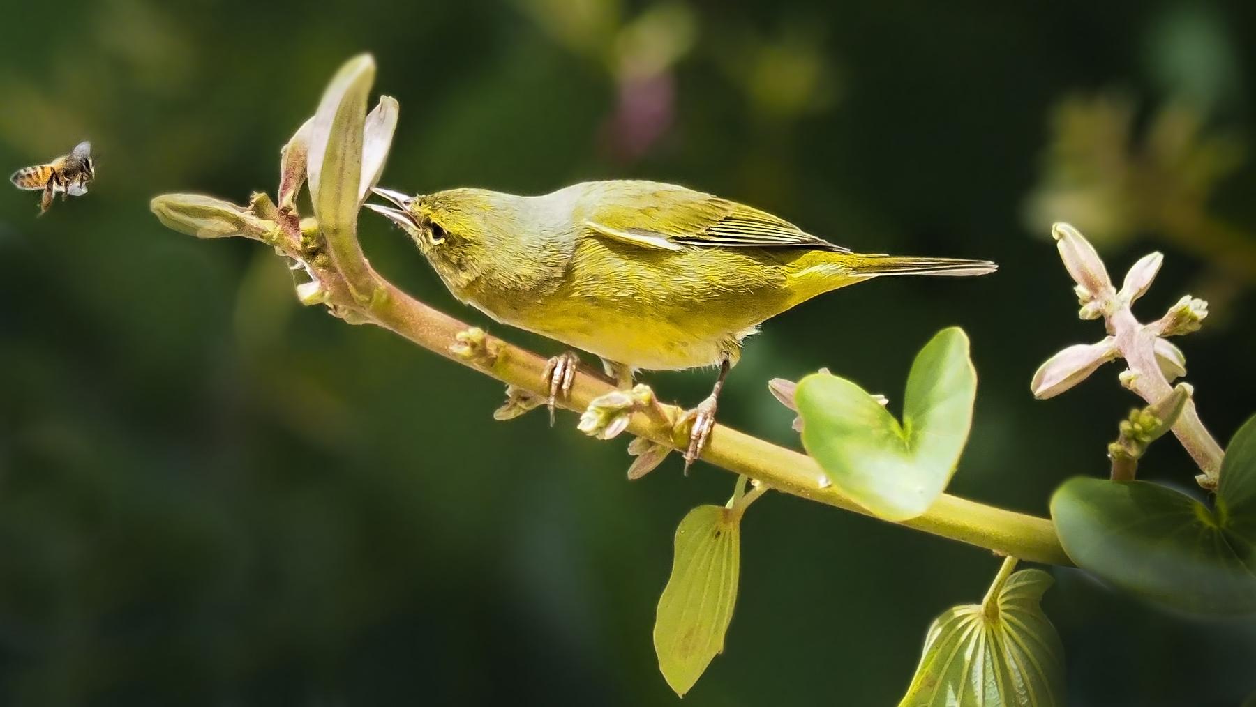 Einer der vielen Vögel in den Bäumen