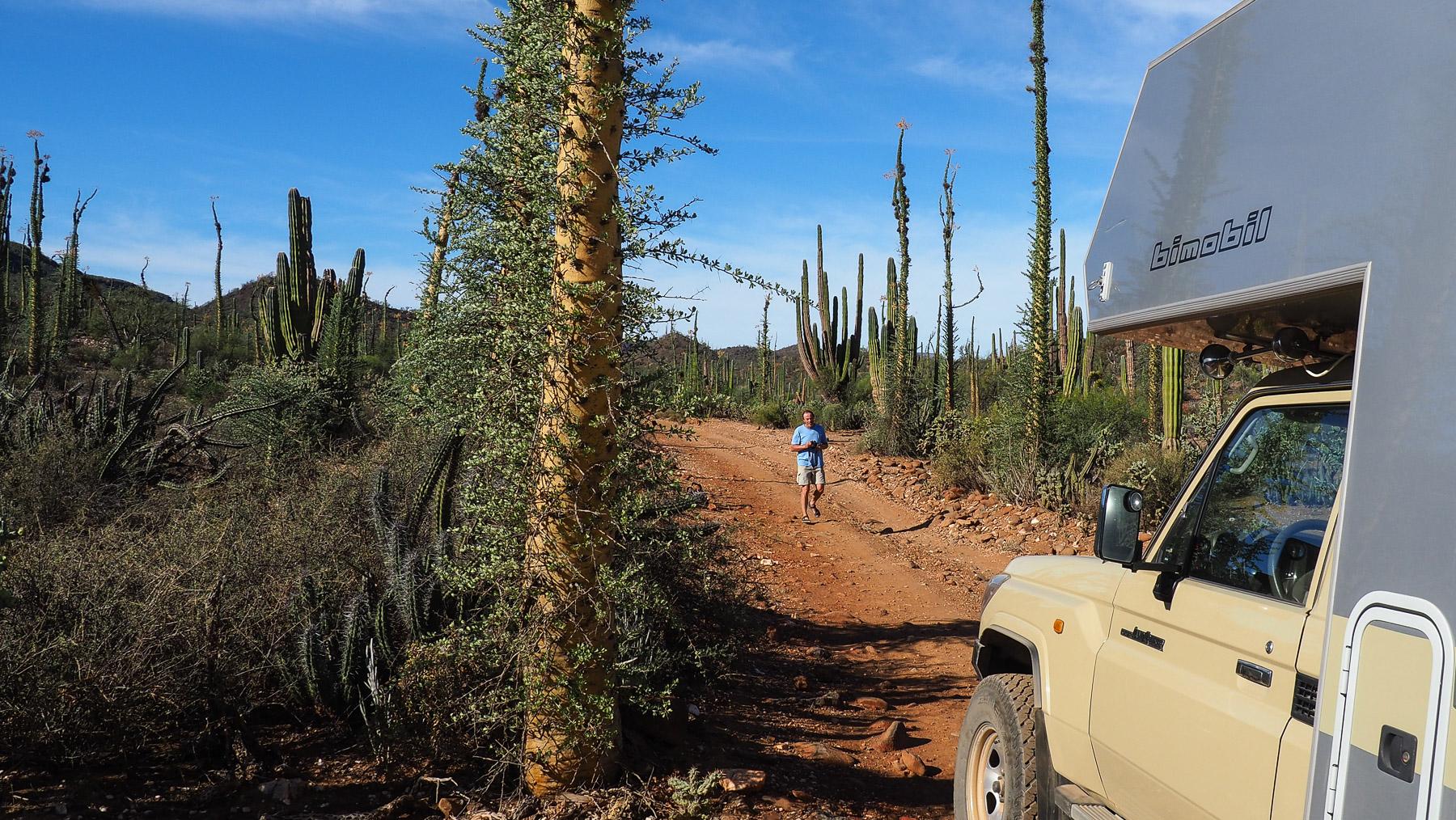 Merkwürdige Gebilde im Kaktusland