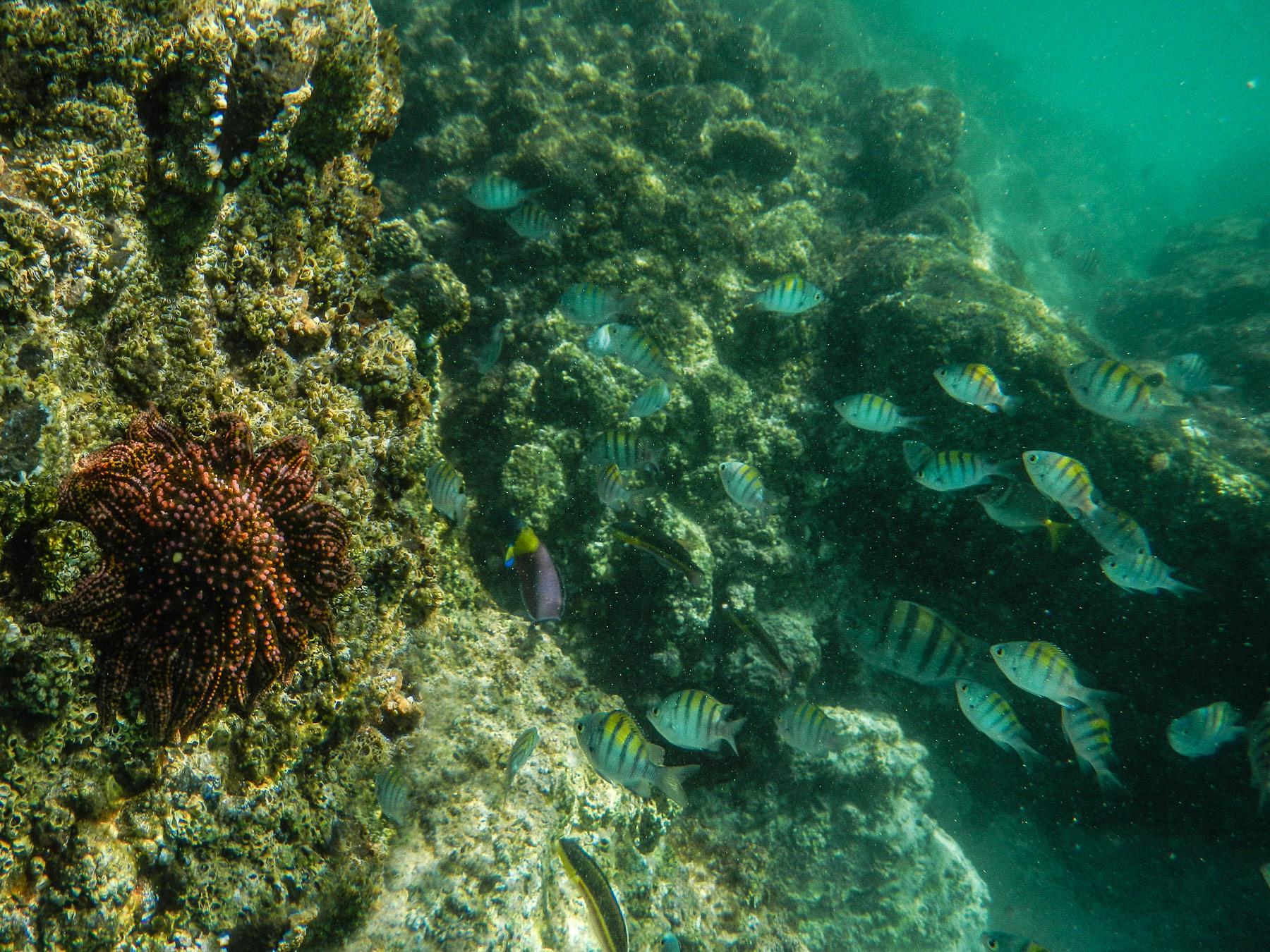Schnorchelbucht Playa Balandra