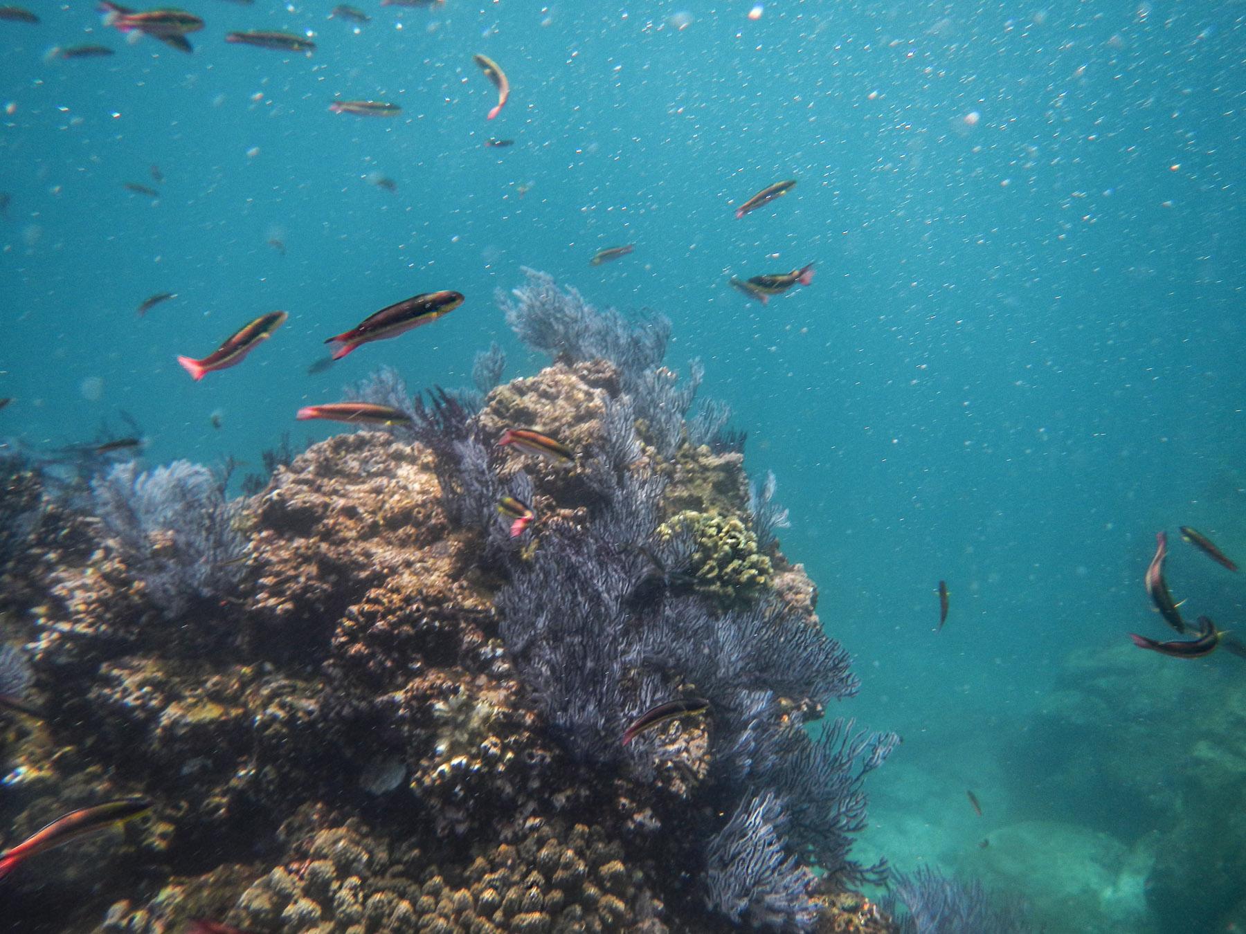 Tolle Unterwasserwelt bei Espiritu Santo