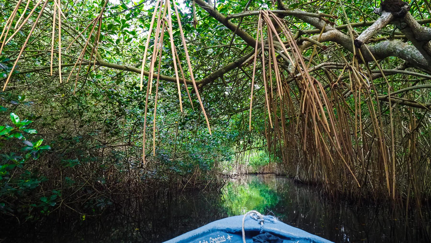 Es geht durch dichte Mangroven ins Hinterland
