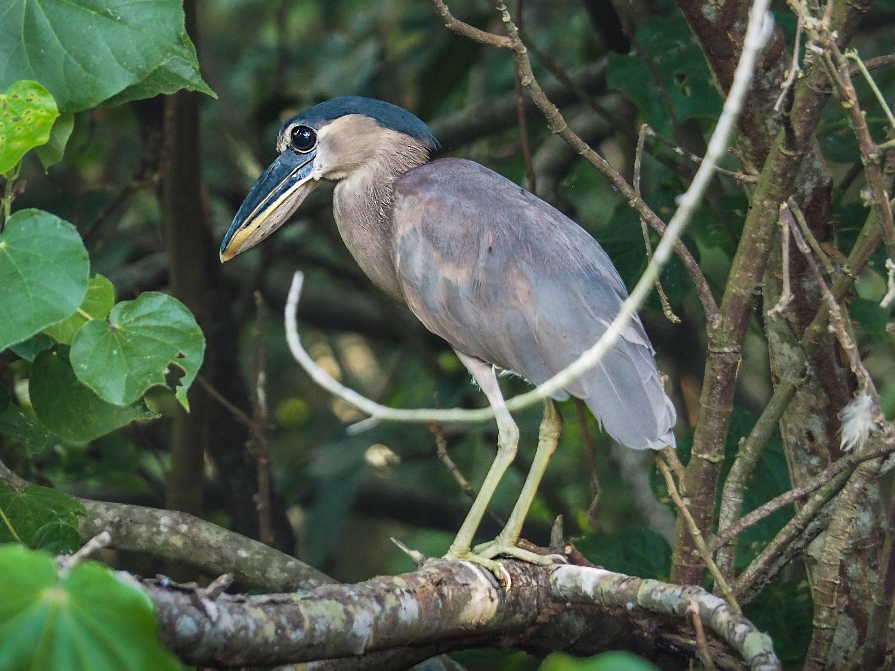 Wie heißt wohl dieser Vogel?