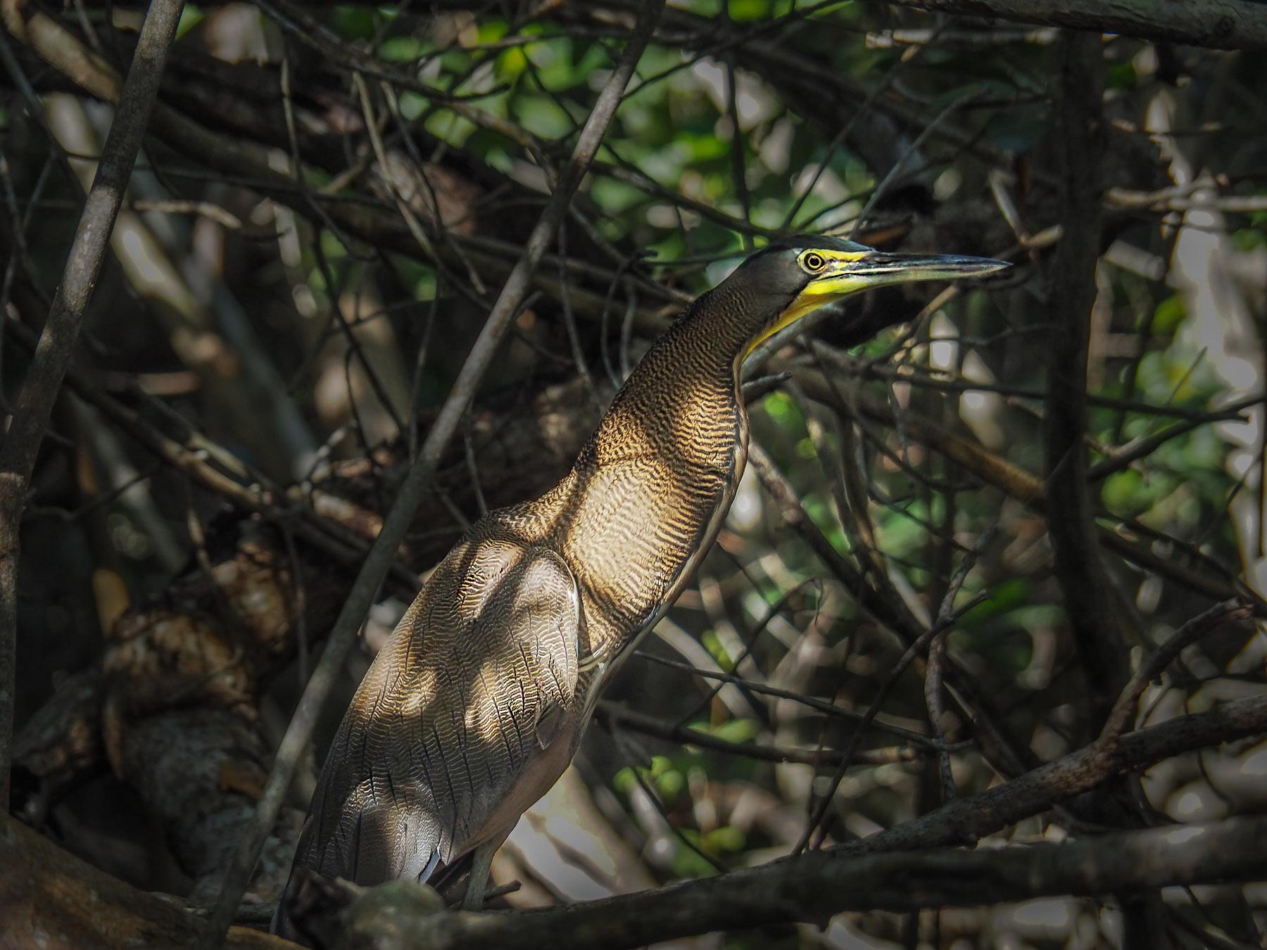 Seltener Vogel versteckt im Unterholz