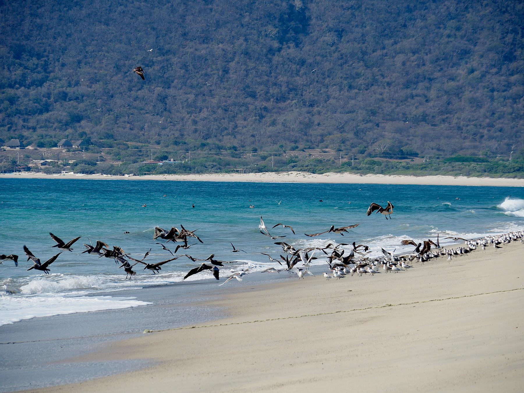 Den Strand bei Salina Cruz müssen wir nur mit den Pelikanen teilen