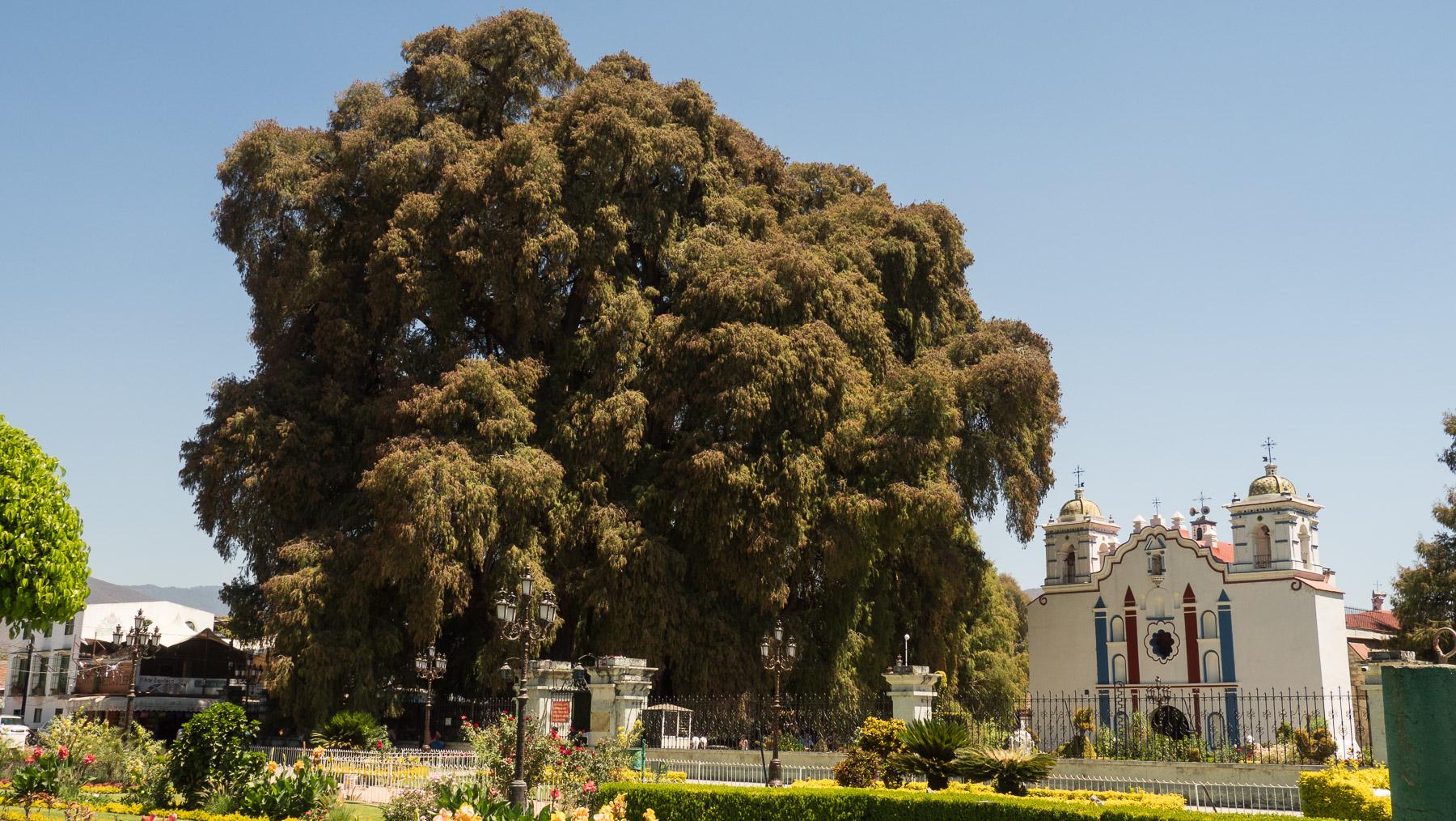 Kleine Kirche neben großem Baum