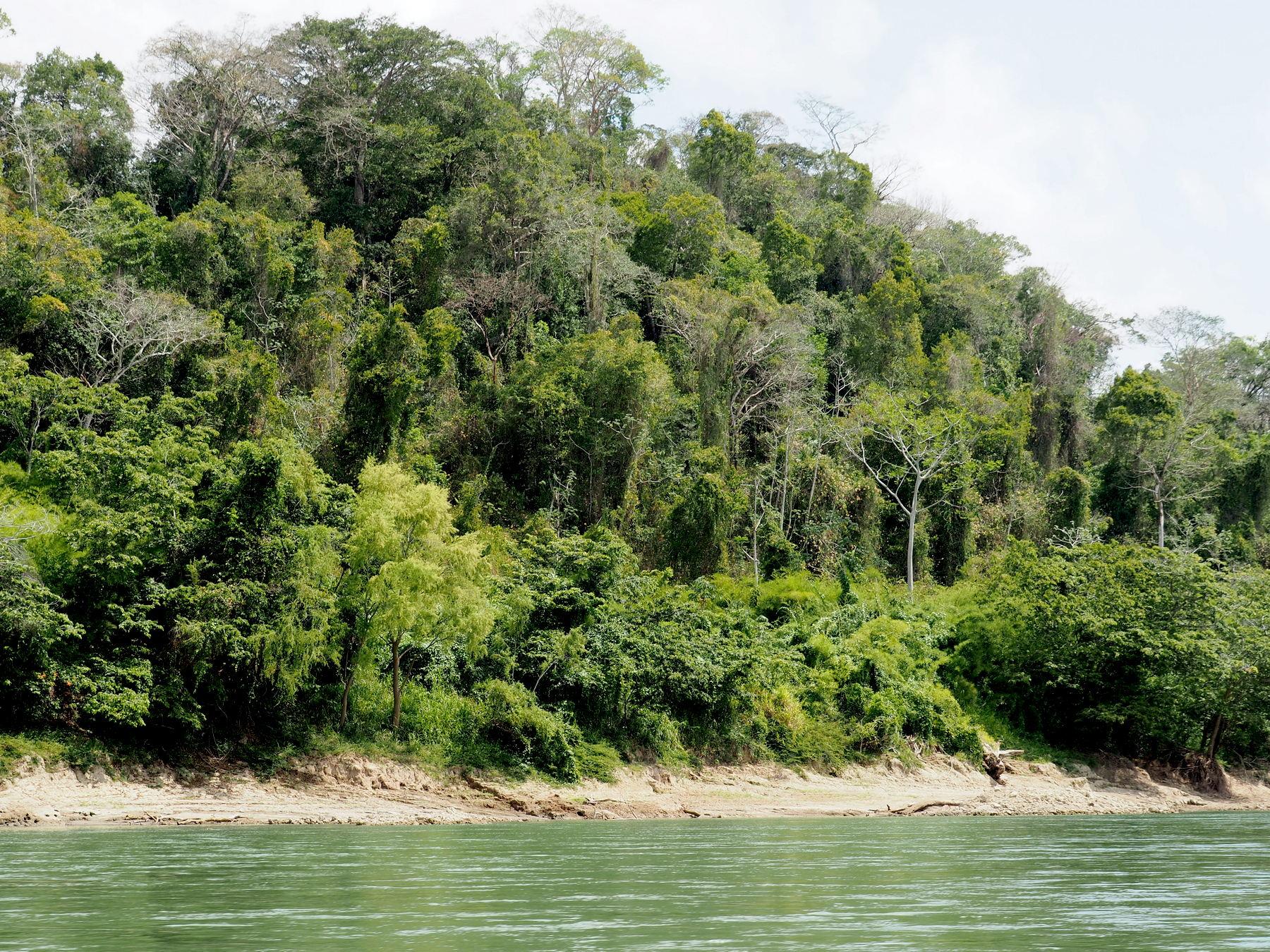 Das Flussufer ist eine grüne Wand