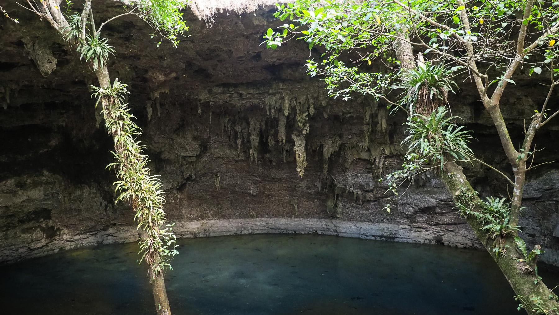 Riesenterrarium in der 2. Cenote