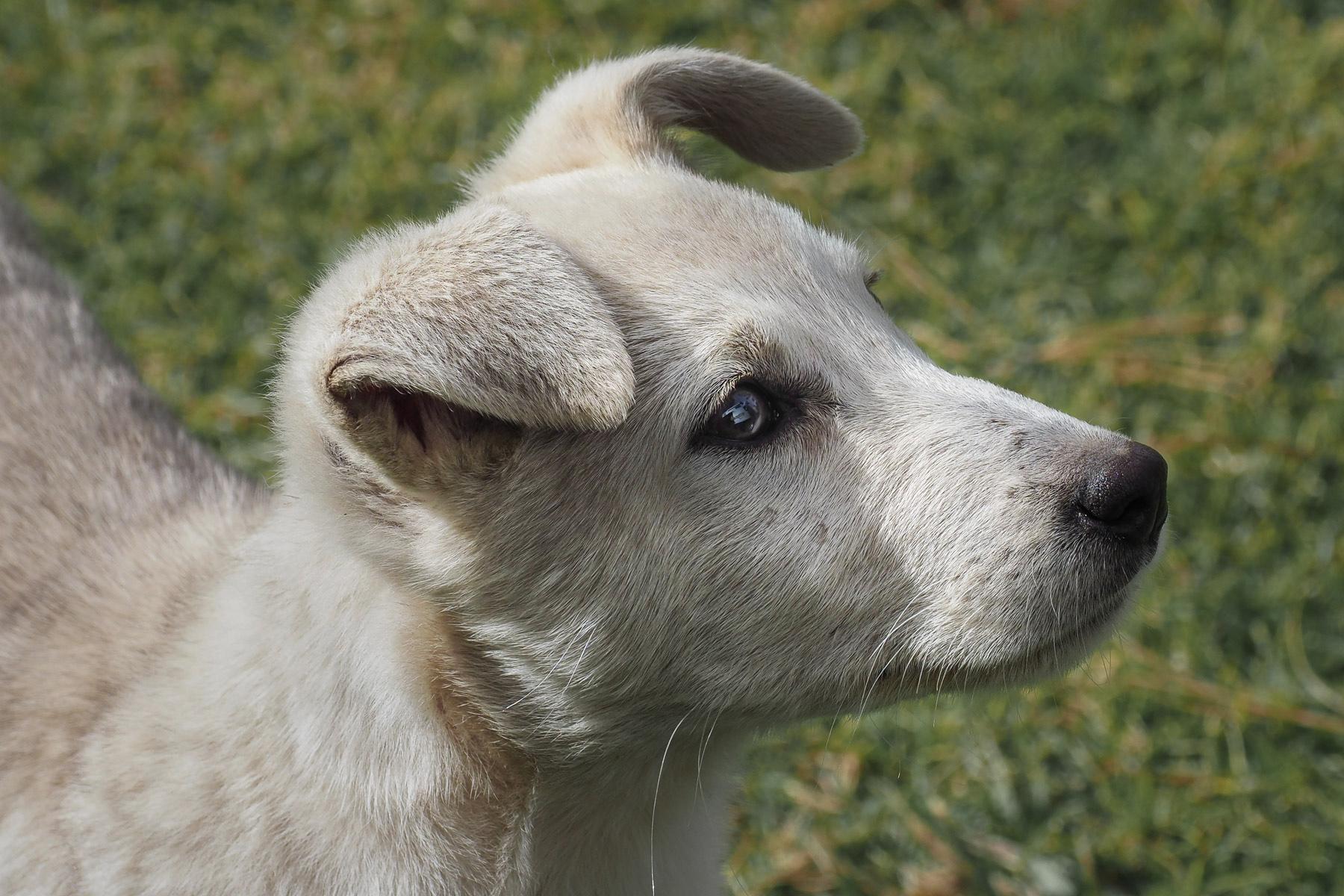 So ein süßes Kerlchen. Armer kleiner Strassenhund.